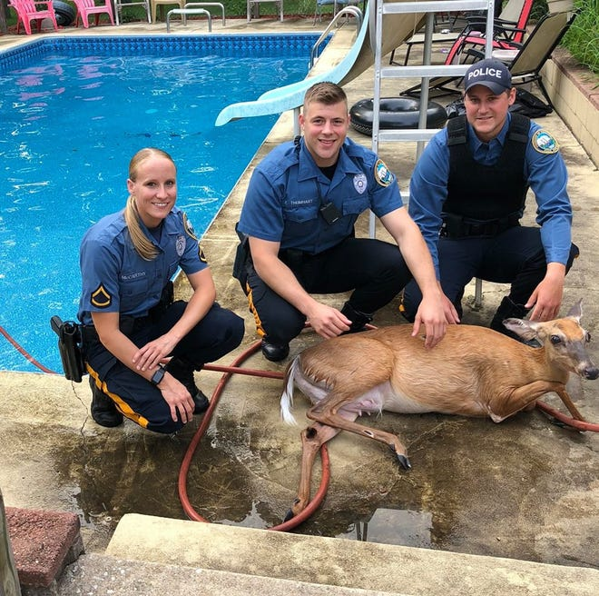 Three Hamilton Township officers rescued a deer from a backyard swimming pool.