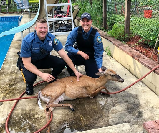 Hamilton Township officers were called to handle the unusual assignment of rescuing a deer from a swimming pool.