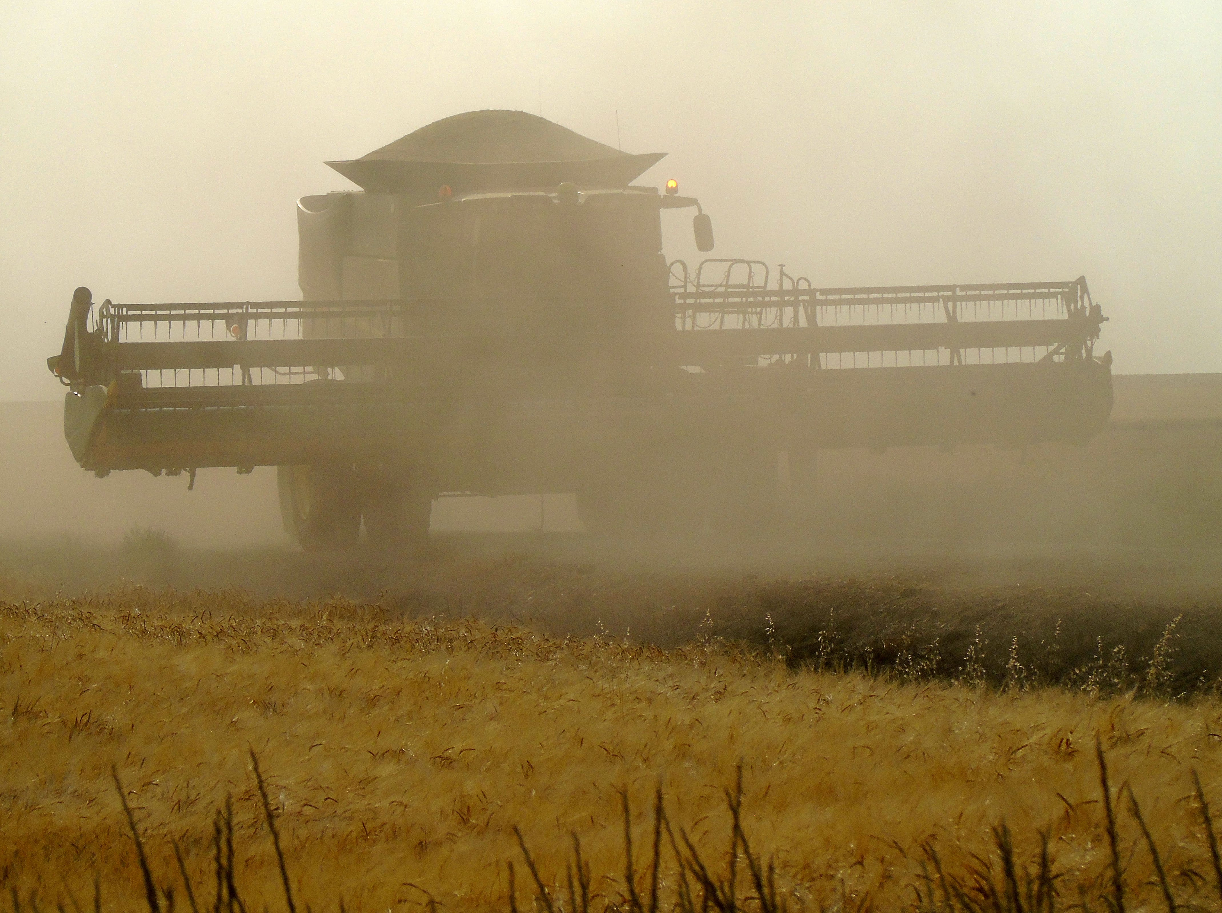 A combine travels a dusty road during winter wheat harvest between Big Sandy and Loma