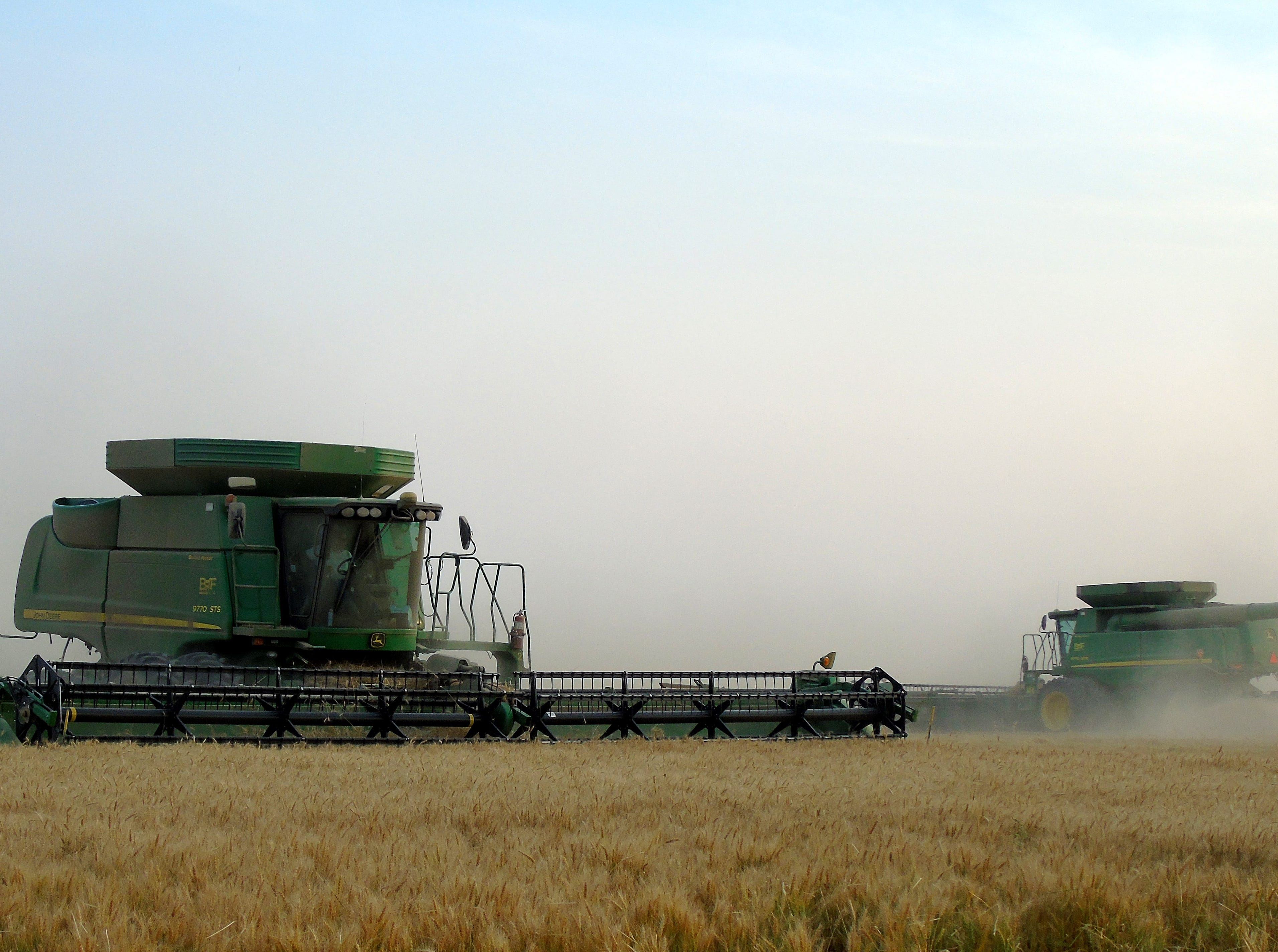 Combine cuts winter wheat on the Bahnmiller Family Farms south of Big Sandy.