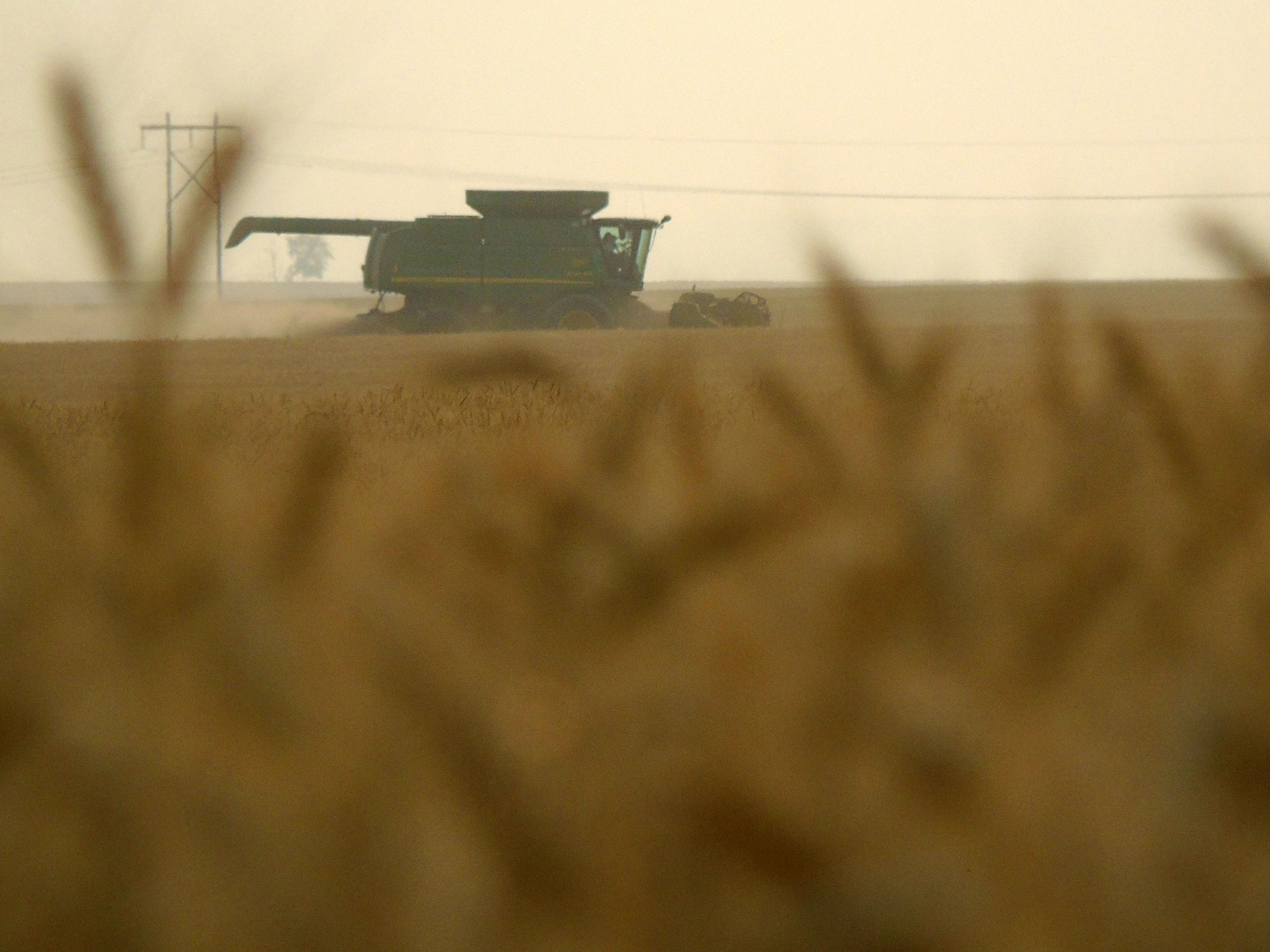 A combine harvests winter wheat on the Bahnmiller Family Farms near Big Sandy.