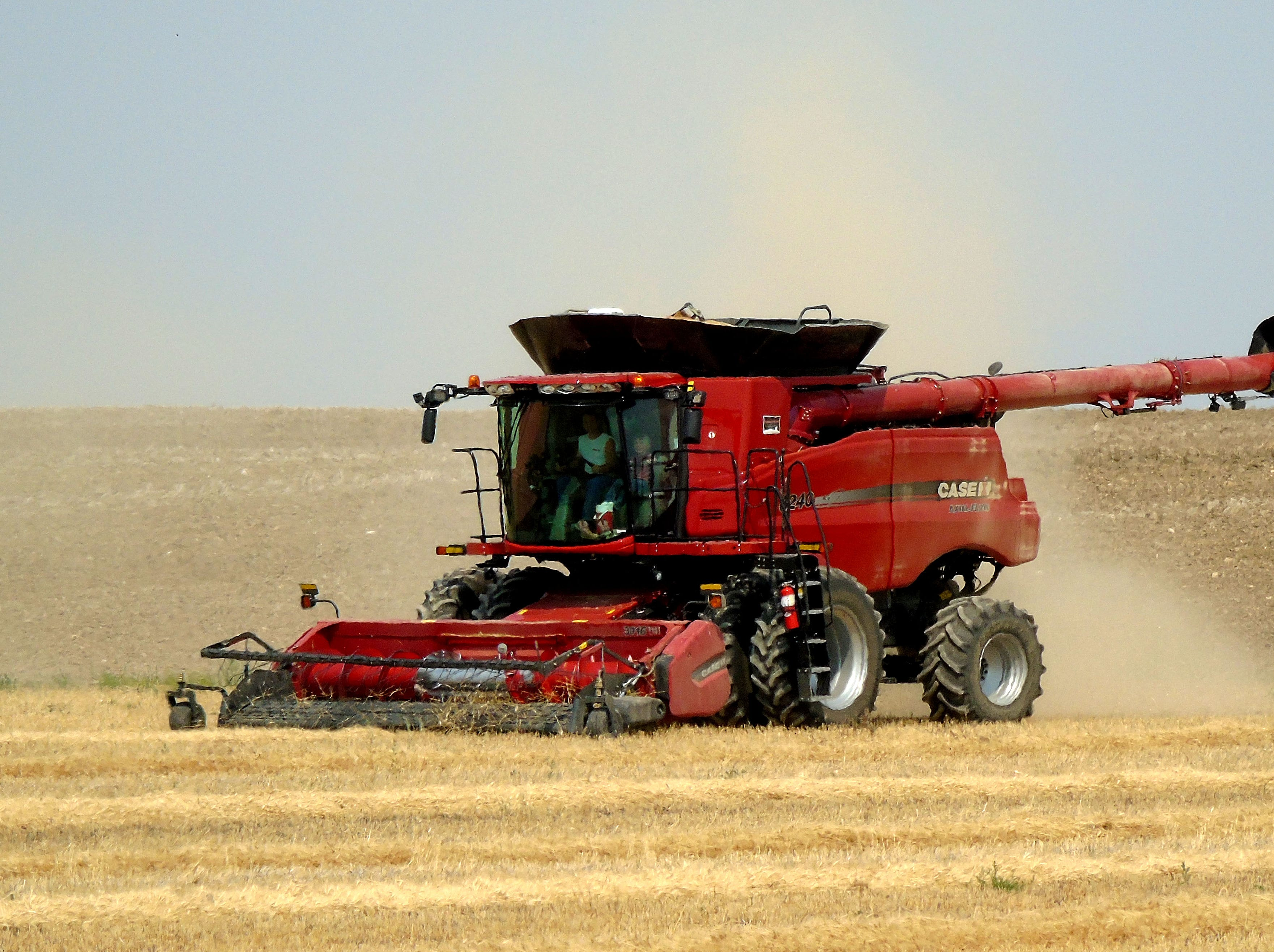 A combine picks up swathed winter wheat near Carter.