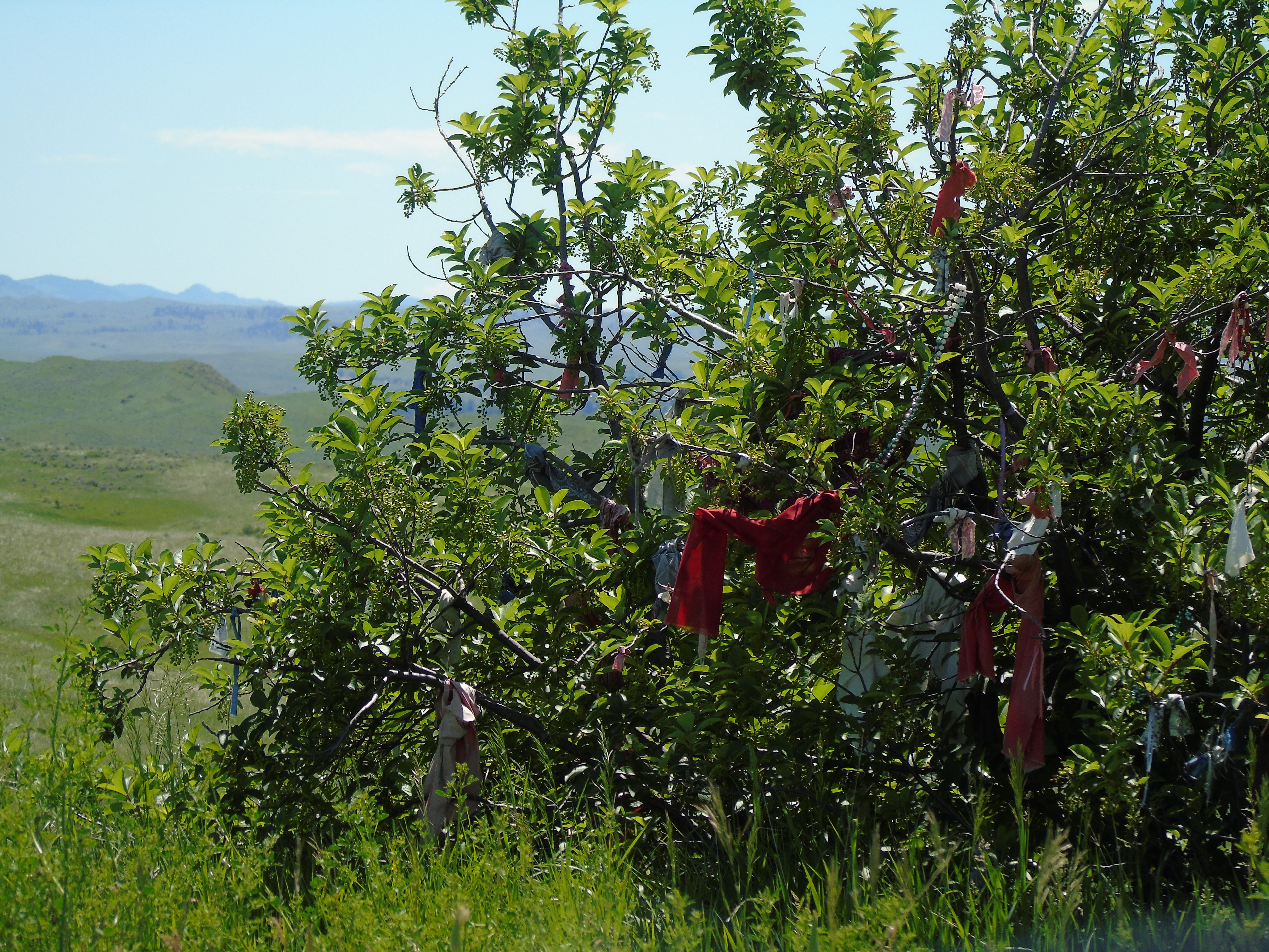 Native American prayer cloths tied to a bush at the Little Bighorn Battlefield near Crow Agency.