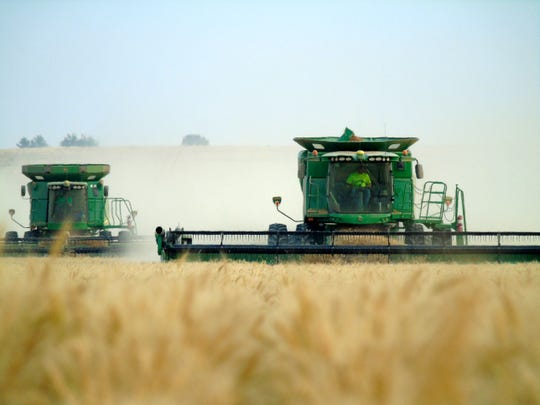 Harvest on the Bahnmiller Family Farms south of Big Sandy.