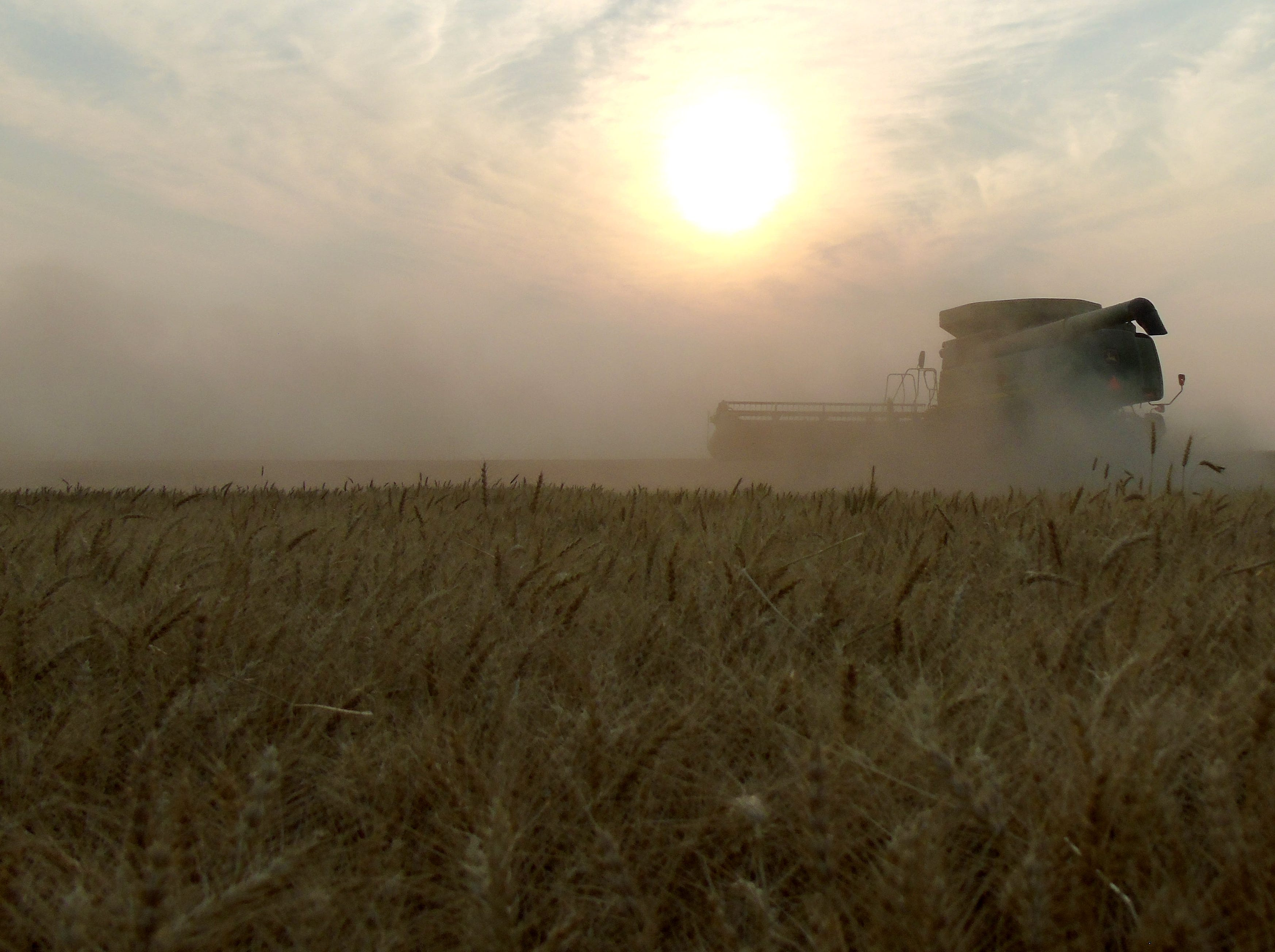 A combine cuts winter wheat on the Bahnmiller Family Farms south of Big Sandy.