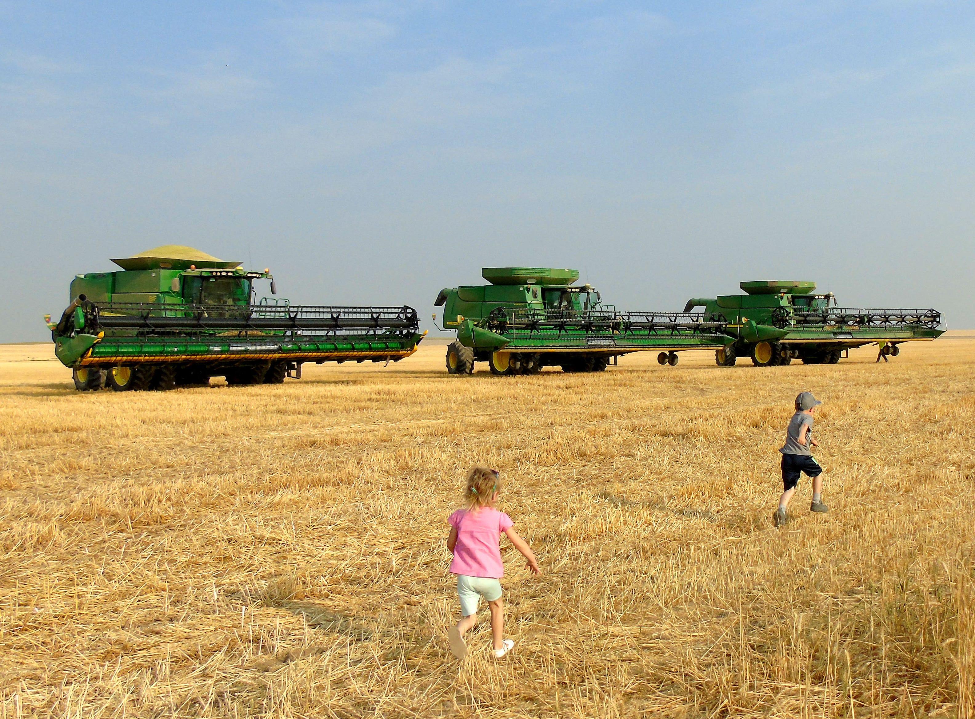 Harvest on the Bahnmiller Family Farms near Big Sandy.