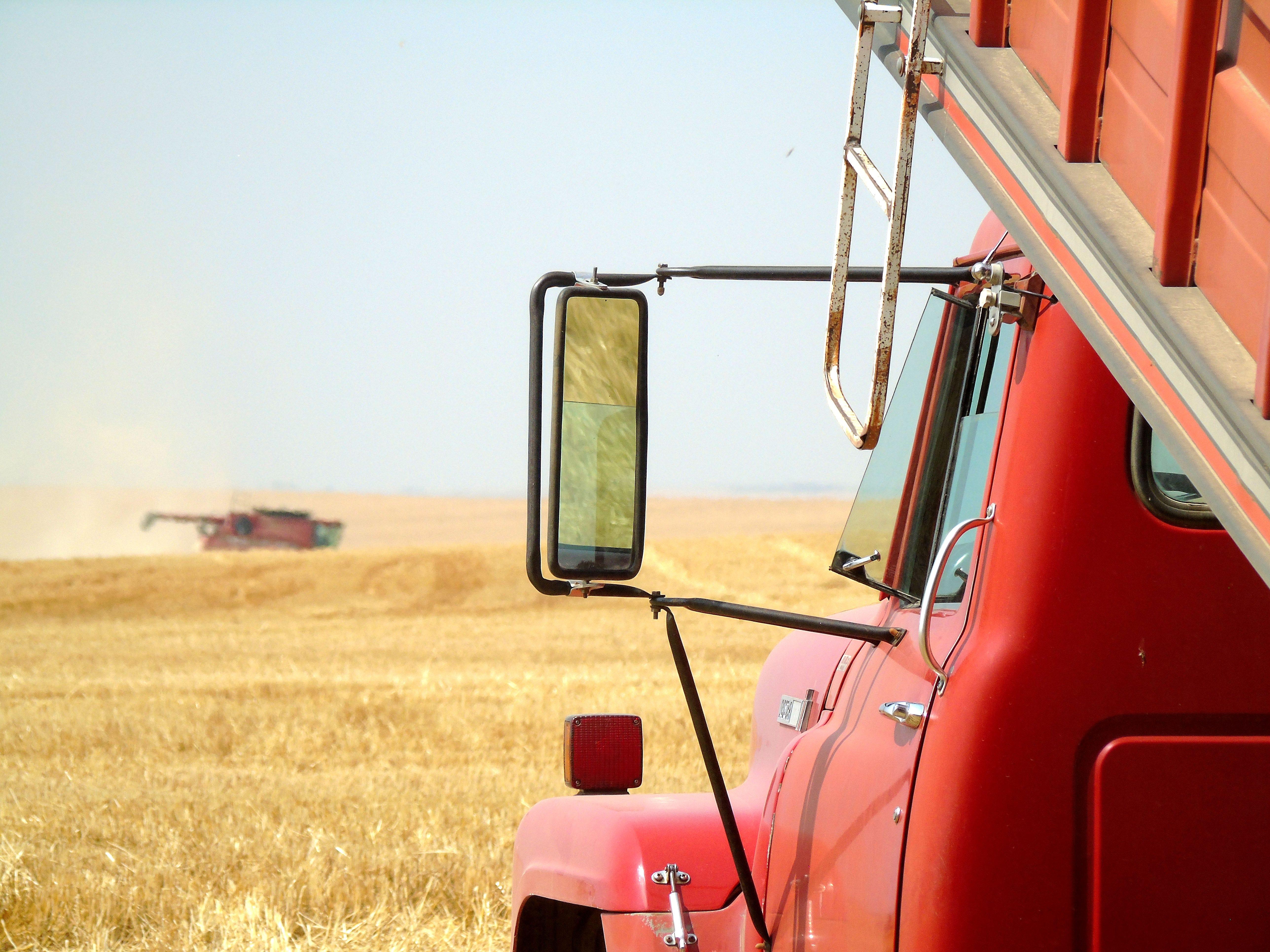 Combines cut winter wheat on Rominger Farms near Floweree.