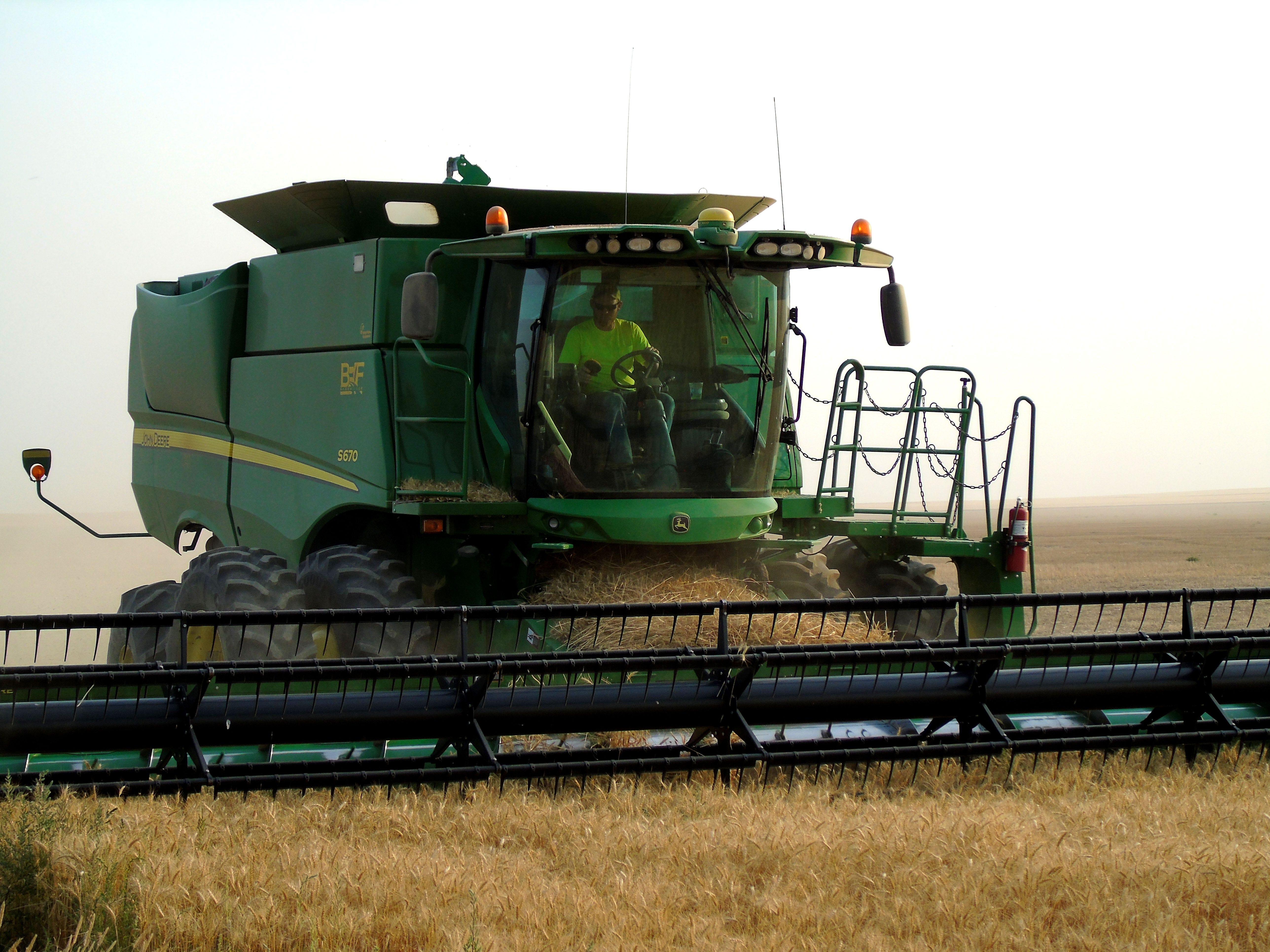 Kallan Bahnmiller harvests winter wheat on the Bahnmiller Family Farms near Big Sandy.