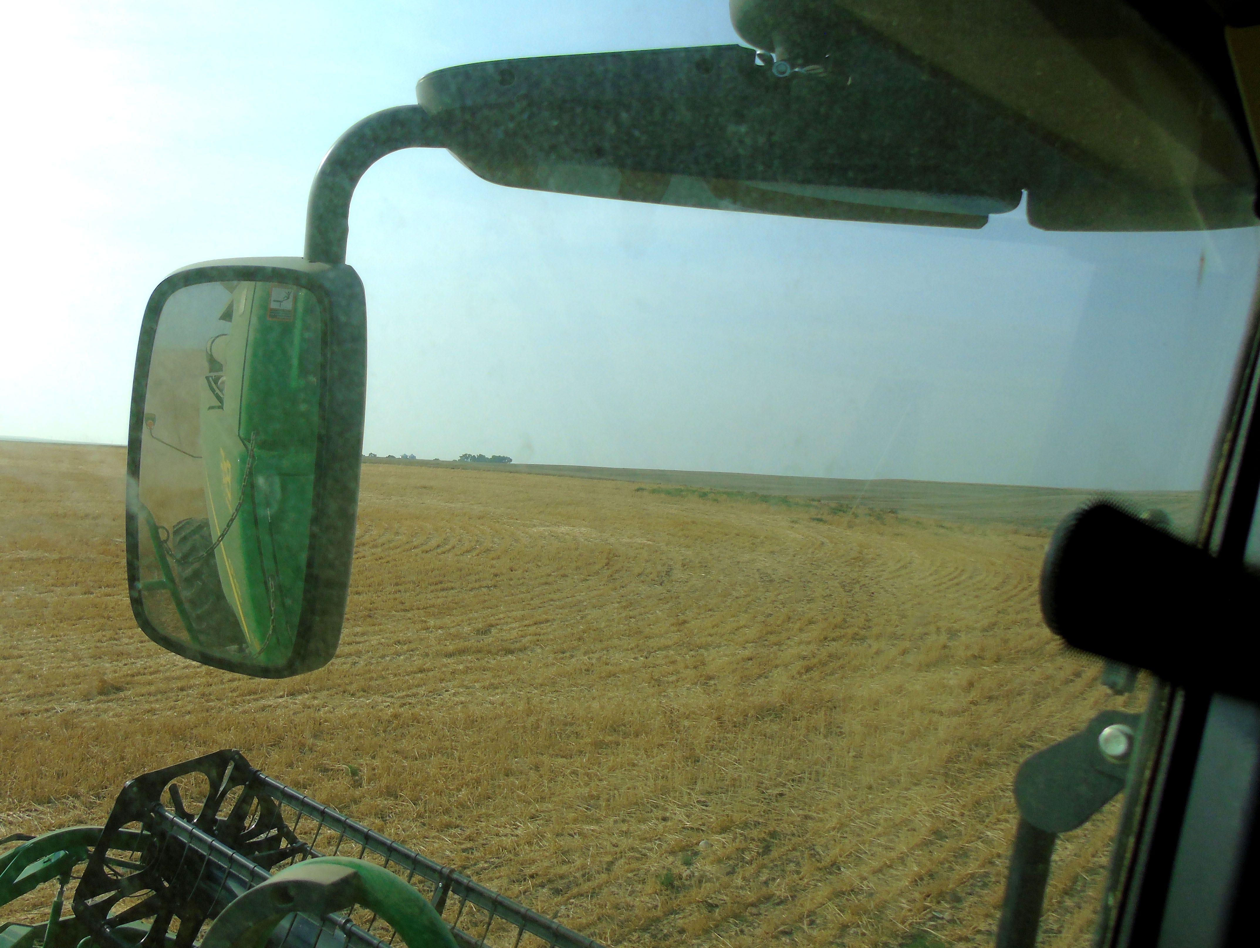 Kallan Bahnmiller harvests winter wheat near Big Sandy.