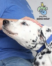 Even one day with a loving human pal makes a difference to a shelter dog like Jazzie.