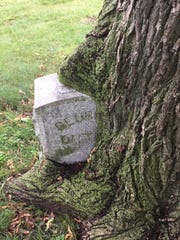 The gravestone of George Dittmar at Forest Home Cemetery in Milwaukee is being swallowed up by a large tree. The unusual grave is a popular stop on the cemetery's annual Halloween tour.