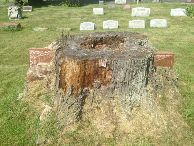 Two gravestones at St. Adalbert Cemetery on Milwaukee's south side have been enveloped by a large tree, which was cut down several years ago. The rotting trunk makes it impossible to read the two markers, but cemetery records show the grave belongs to August and Paulina Wichman, who died in 1914 and 1924, respectively.