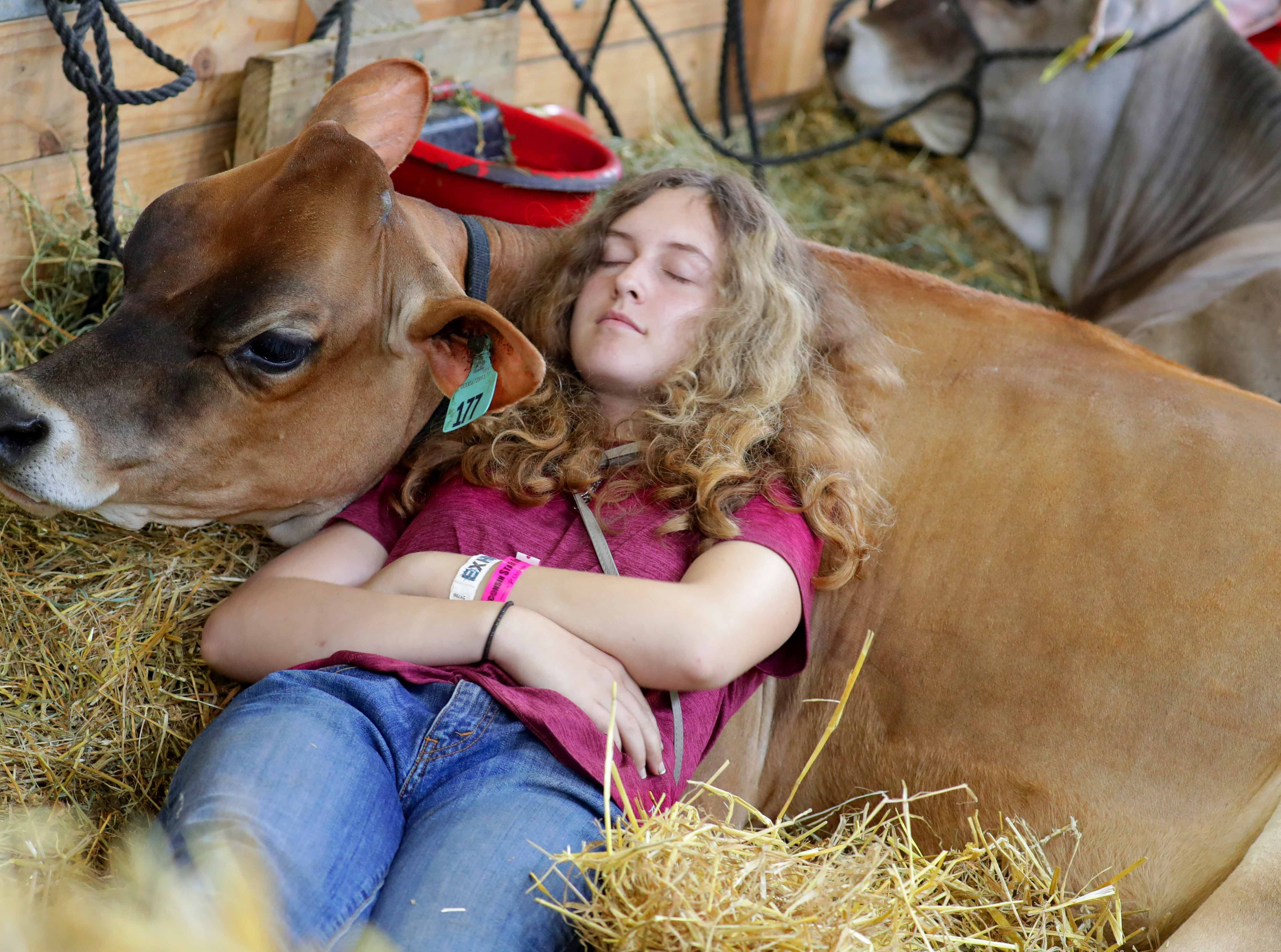 Mckenna Layer, 14, of Richland Center  and a member of the Syresville Starlets 4-H club, takes a rest on her nearly 1-year-old Jersey calf, Melody. Youths from across the state descended on the Wisconsin State Fair grounds in West Allis to ready their animals for shows.