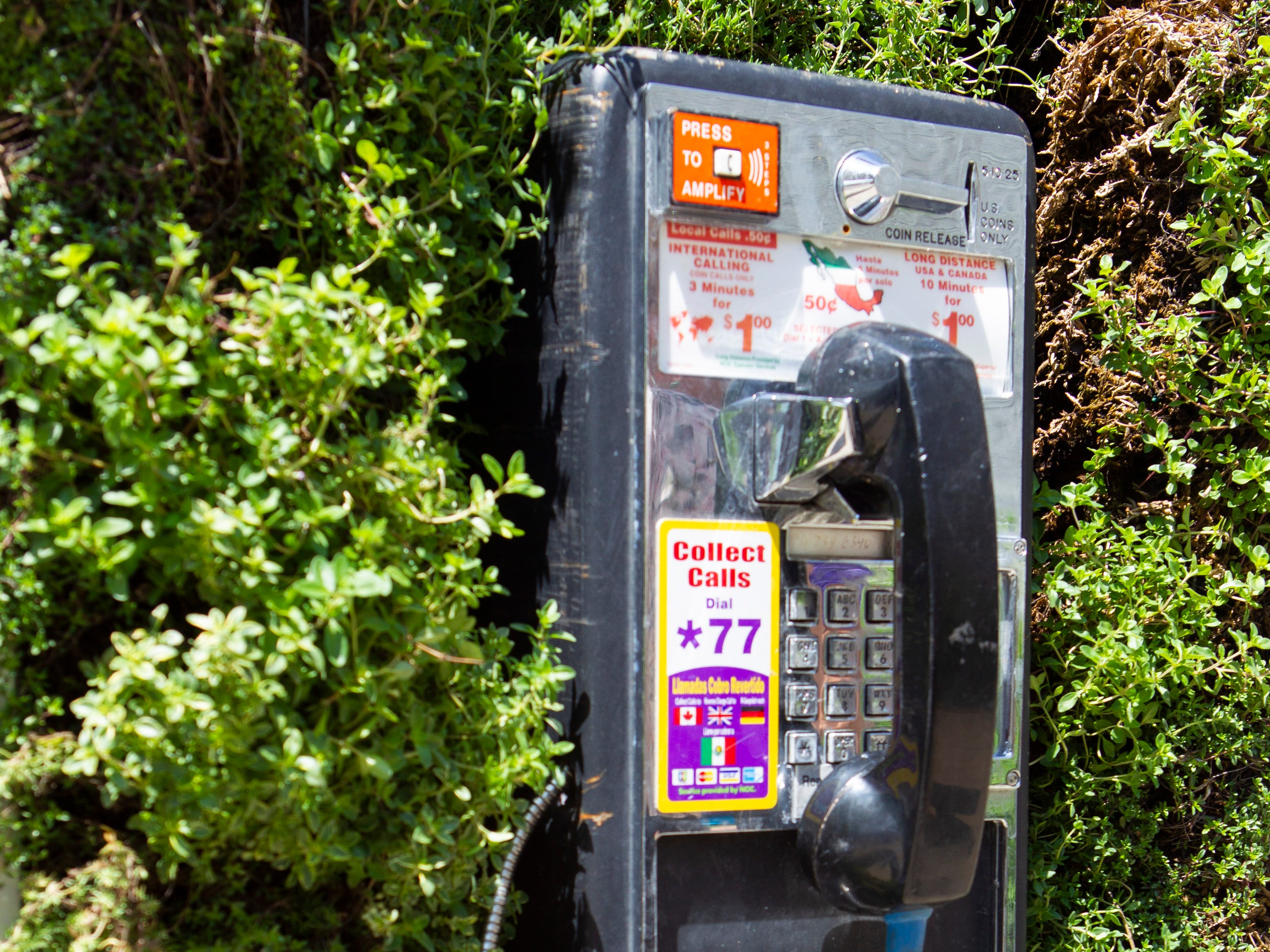 An old pay phone is filled with thyme at Wisconsin State Fair Park. But save your quarters – this phone doesn't have thyme to connect your call.
