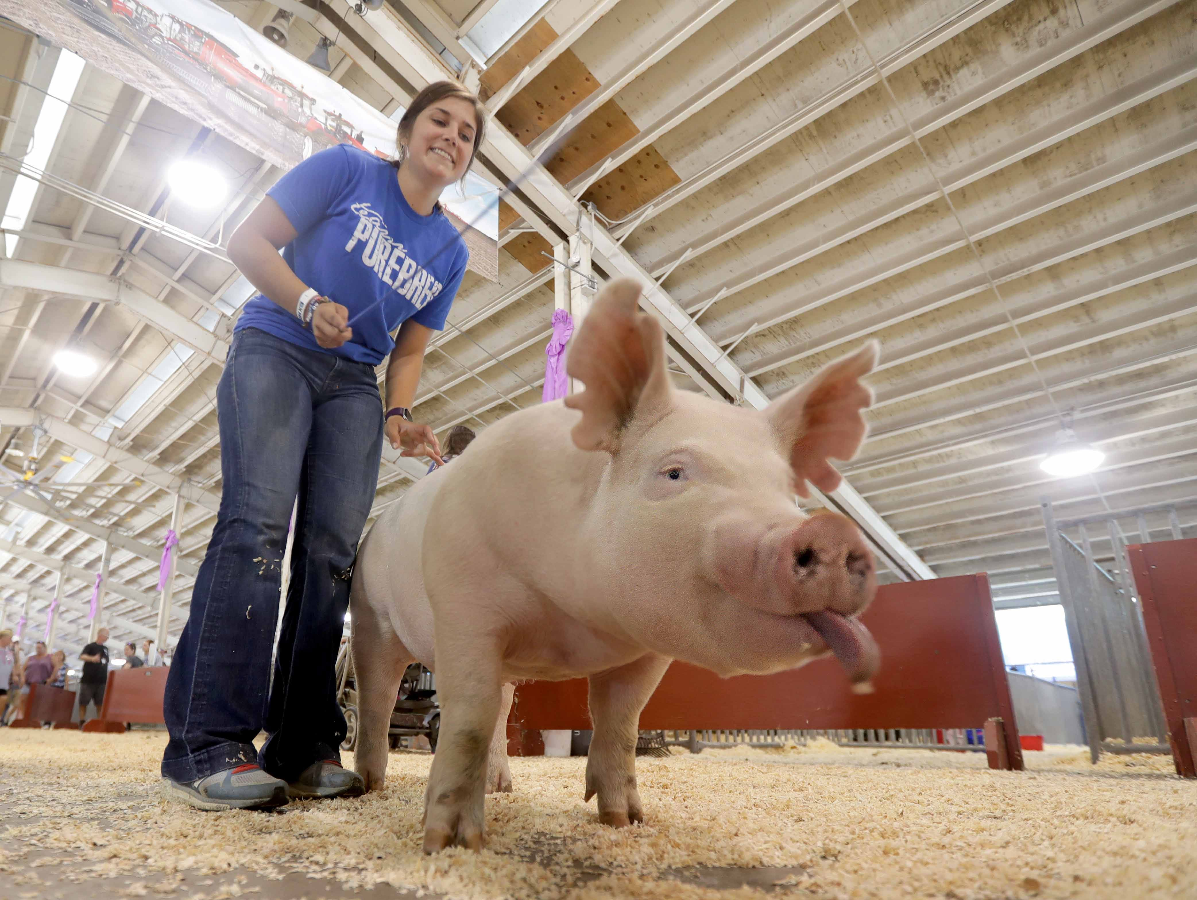 W-ANIMALS - Elysa Doherty, 19, with the Wisconsin Show Pig Association WSPA, walks her pig to the show area.   Youth from across the area from various 4-H groups and agriculture organizations, descended on the Wisconsin State Fair grounds in West Allis to ready their animals for shows. The opening of the 167th Wisconsin State Fair took place at the Wisconsin State Fair grounds in West Allis on Thursday, August 2, 2018. The fair runs through Sunday, August 12  -  Photo by Mike De Sisti / Milwaukee Journal Sentinel