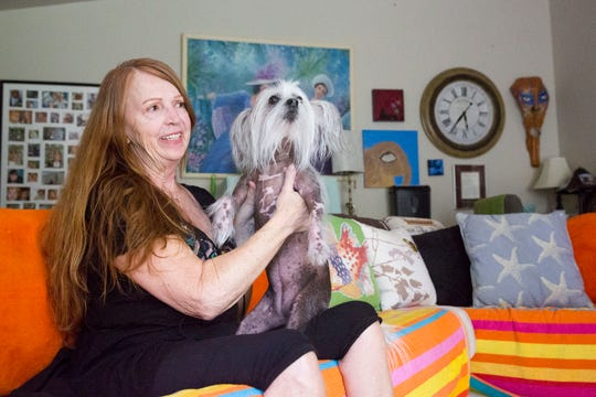 Sharon Kurtz is pictured with her eight-year-old Chinese-crested hairless dog, Audrey Alice, at her home in Naples, Florida on Thursday, August 2, 2018. Audrey Alice possesses human-like qualities, such as the way she sits, and is instinctive in knowing when Kurt is feeling unwell. At the sight of something seeming off, Audrey Alice puts her paw on her owner's chest.