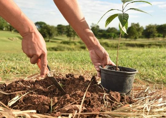 Stock image:  Planting of a tree