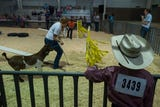 The Larimer County Fair's initial events are still going strong while the larger events will be ramping up throughout the weekend.