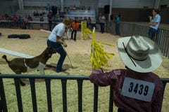The 2018 Larimer County Fair is here