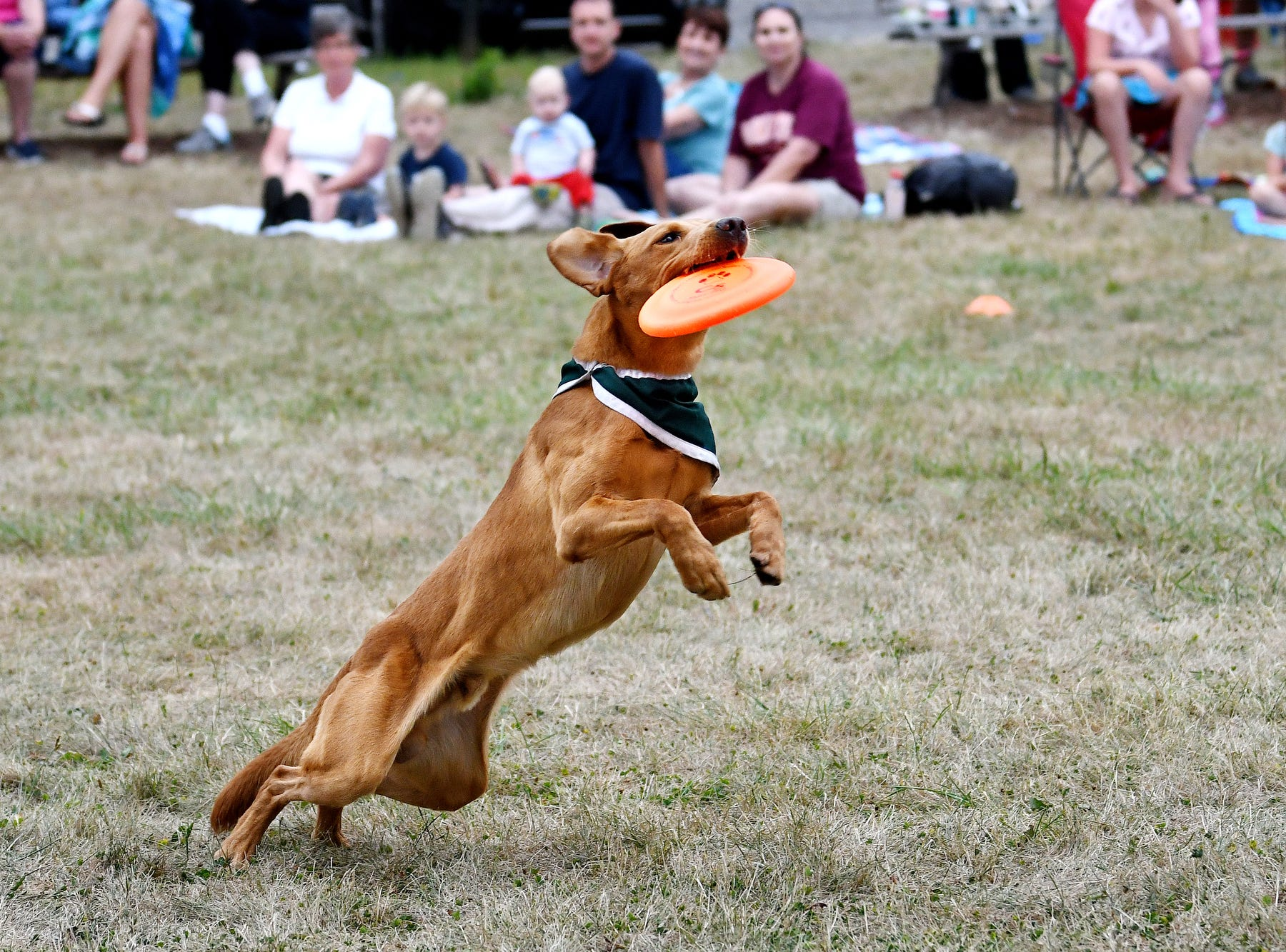 Zeke the Wonderdog IV catches a flying disc that his caretaker Jim Foley threw during Play in the Park on Tuesday, July 31, 2018, at Valley Court Park in East Lansing.