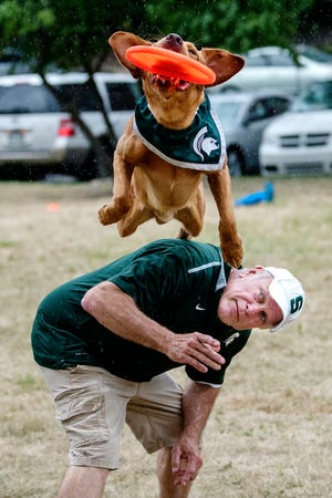 Zeke the Wonderdog IV leaps off his caretaker Jim Foley's back to catch a flying disc on Tuesday, July 31, 2018, at Valley Court Park in East Lansing.