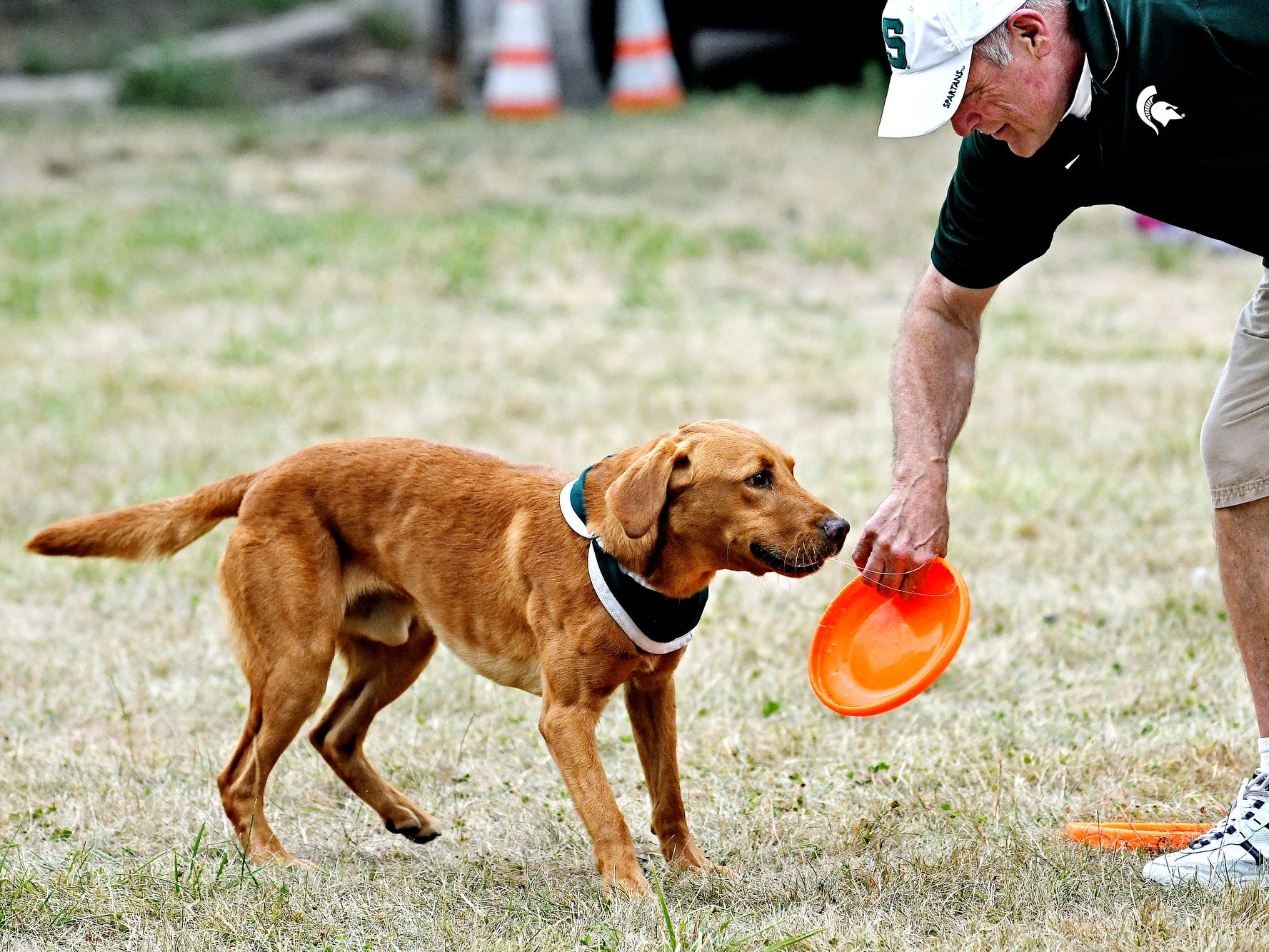 Zeke the Wonderdog IV looks on as and his caretaker Jim Foley prepares to throw it during Play in the Park on Tuesday, July 31, 2018, at Valley Court Park in East Lansing.