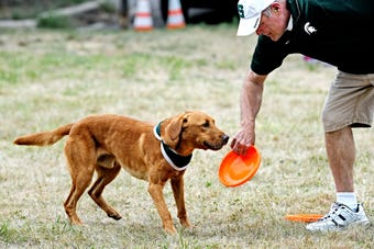 Zeke the Wonderdog's caretaker Jim Foley talks about what it means to work with the famous dog at a performance at Play in the Park in East Lansing.