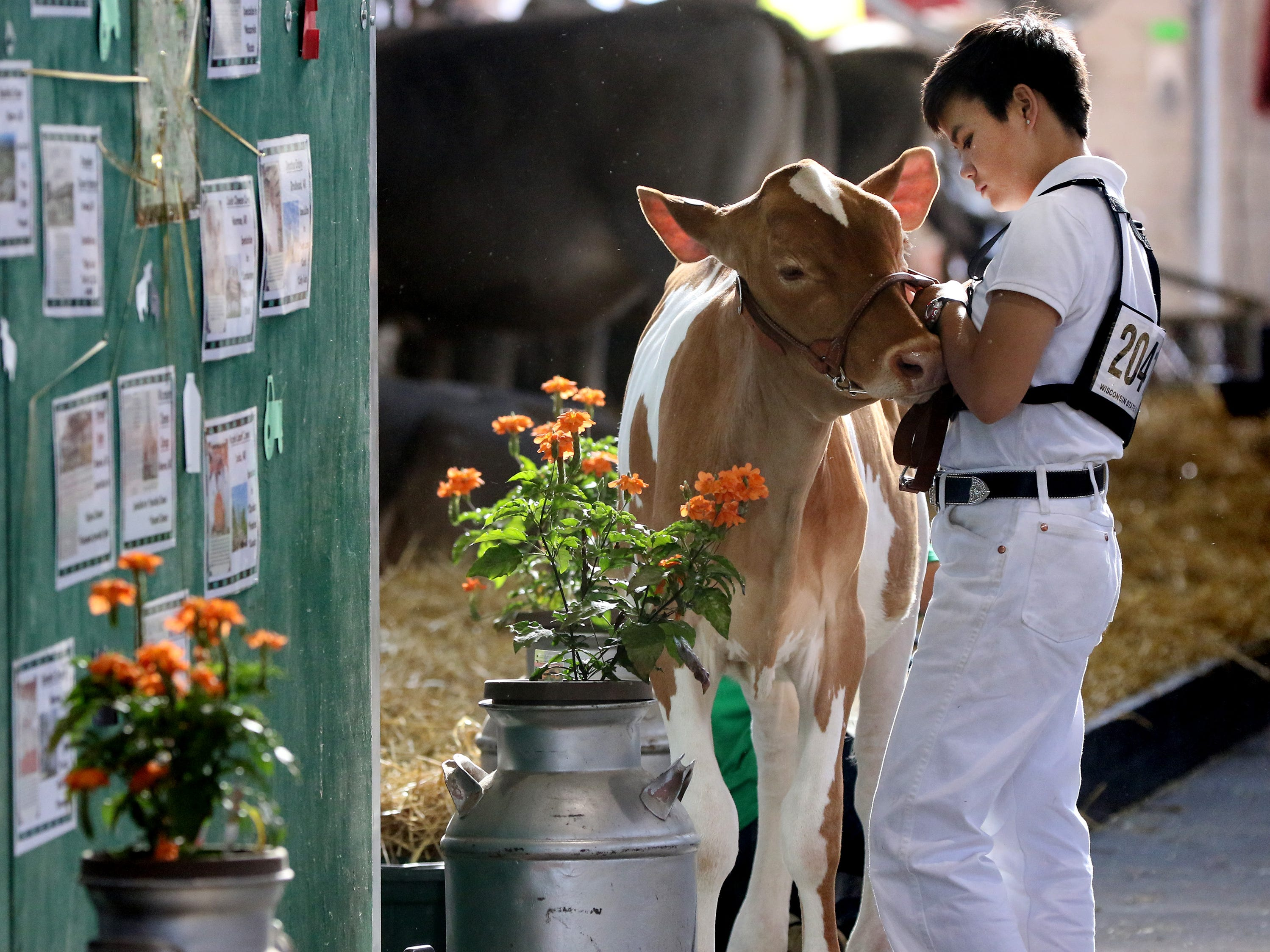 Averey Marean of Albany waits with her Gurnsey spring calf for show competition on opening day of the Wisconsin State Fair in West Allis on Aug. 2.