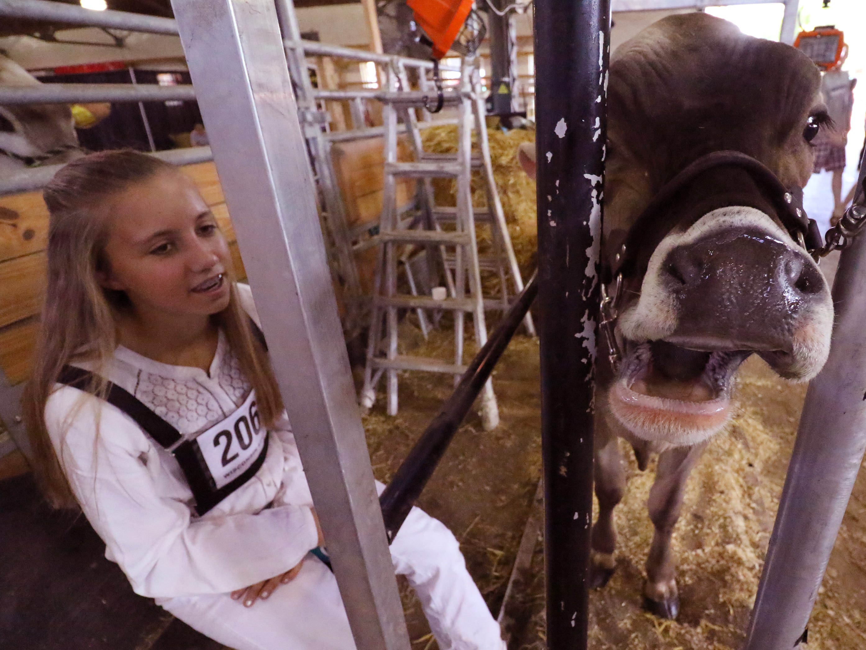 Paige Miess of Dodgeville and her Brown Swiss spring calf are both tired of waiting for their show competition on opening day of the Wisconsin State Fair in West Allis on Aug. 2.