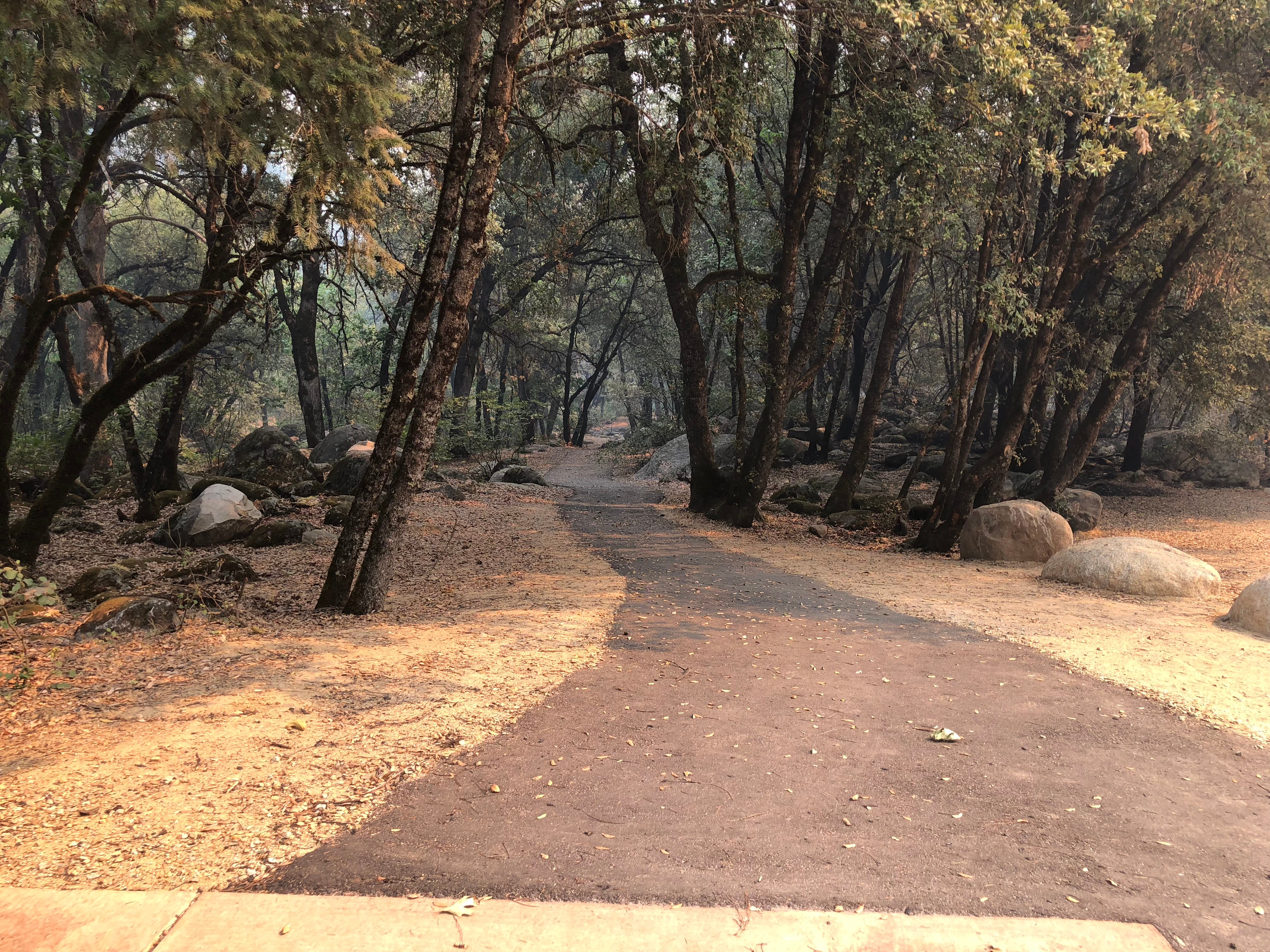 This walking trail by the parking area where South Shore Drive and Brandy Creek Road meet appears to be largely unaffected by the Carr Fire. The area is closed the public, and there are fallen tree branches are on the sides of the road on the way there.