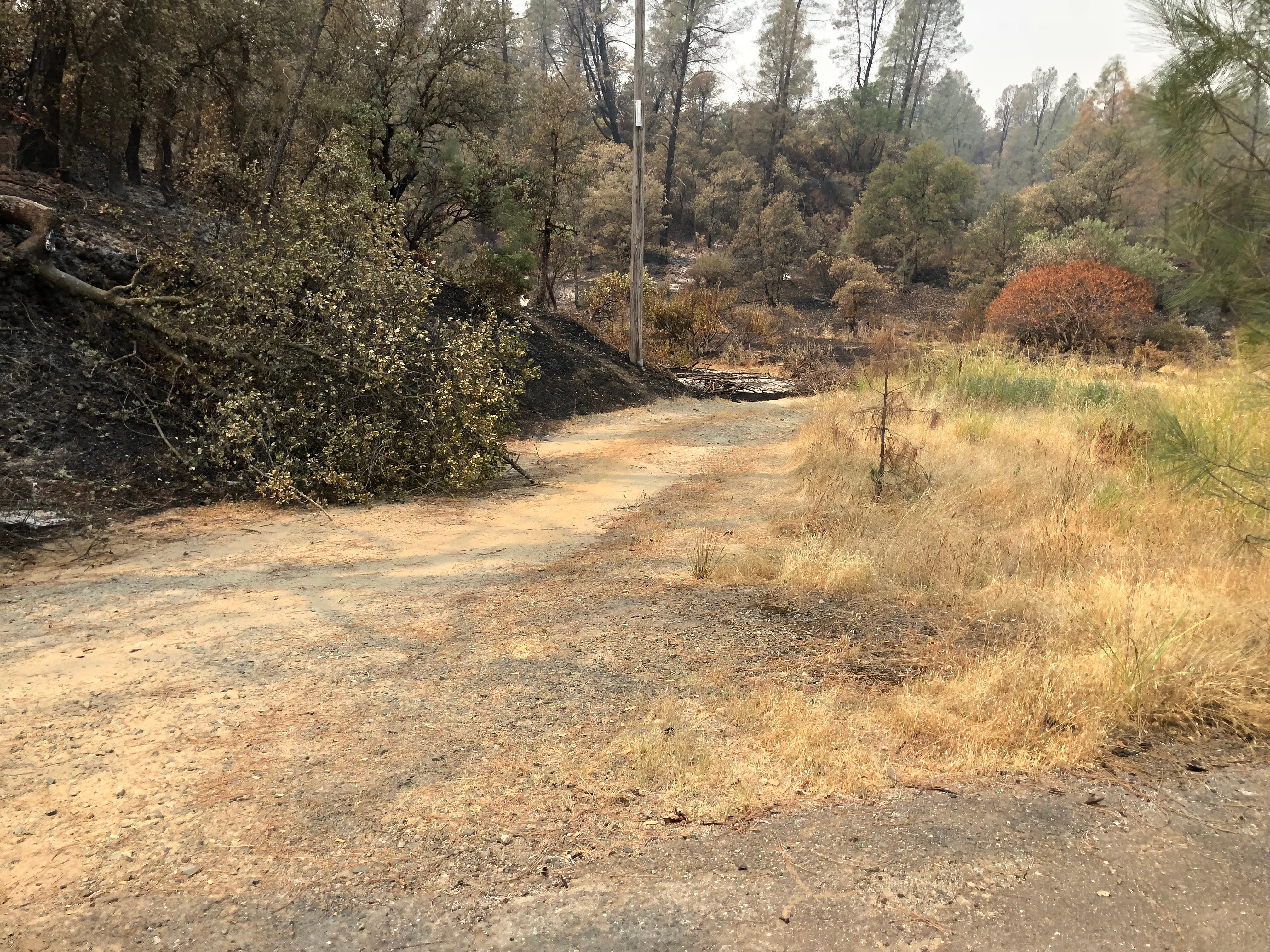Carr Fire damage, including fallen trees and burned-up brush, is easy to find near the Middle Creek Connector Trailhead parking area just south of Highway 299. This trail is inaccessible to the public.