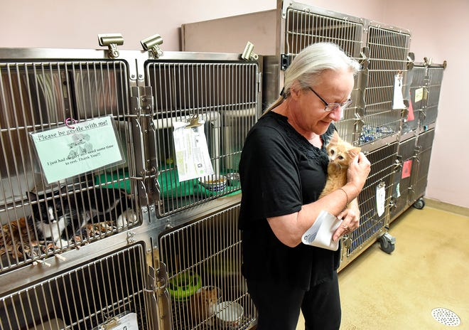 Vicki Davis, director of the Tri-County Humane Society, holds a kitten Friday, Aug. 3, at the shelter in St. Cloud. A puppy room has been converted to a cat room with the large number of cats and lack of space.