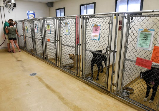 All of the dog kennels were full Friday, Aug. 3, at the Tri-County Humane Society in St. Cloud.