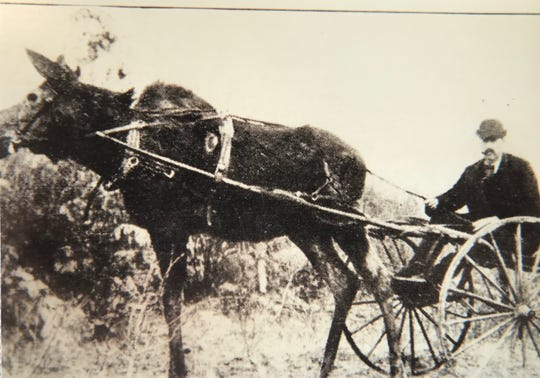 Eugene Shepard was ever the flamboyant showman. Here he's shown in a cart being pulled by a moose.