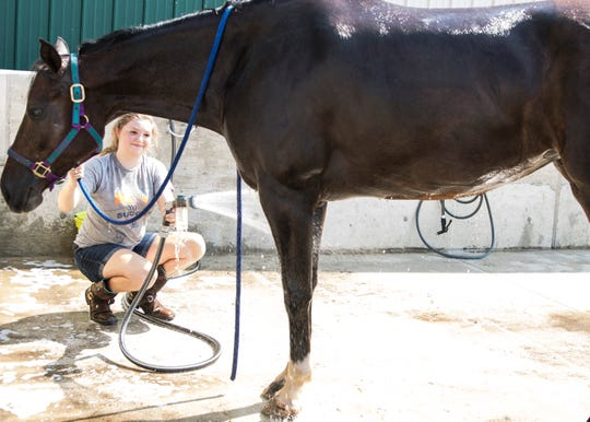 Tessa Rodgers, from the 4-H Club Lope, Rattle N Roll, cleans her horse Tulsa to get ready for this week's Ross County Fair. Tessa continues the proud tradition of showing horses like fair board President Bryan Bethel did for 10 years, when he was in 4-H.