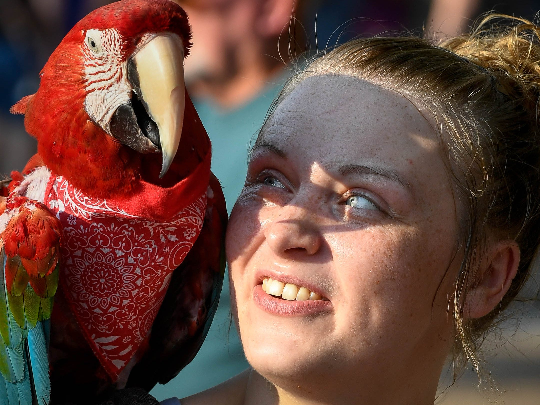Chelsea Moore makes friends with Barron a scarlet macaw at the Haynie's Corner First Friday event in the downtown Arts District Friday, August 3, 2018.