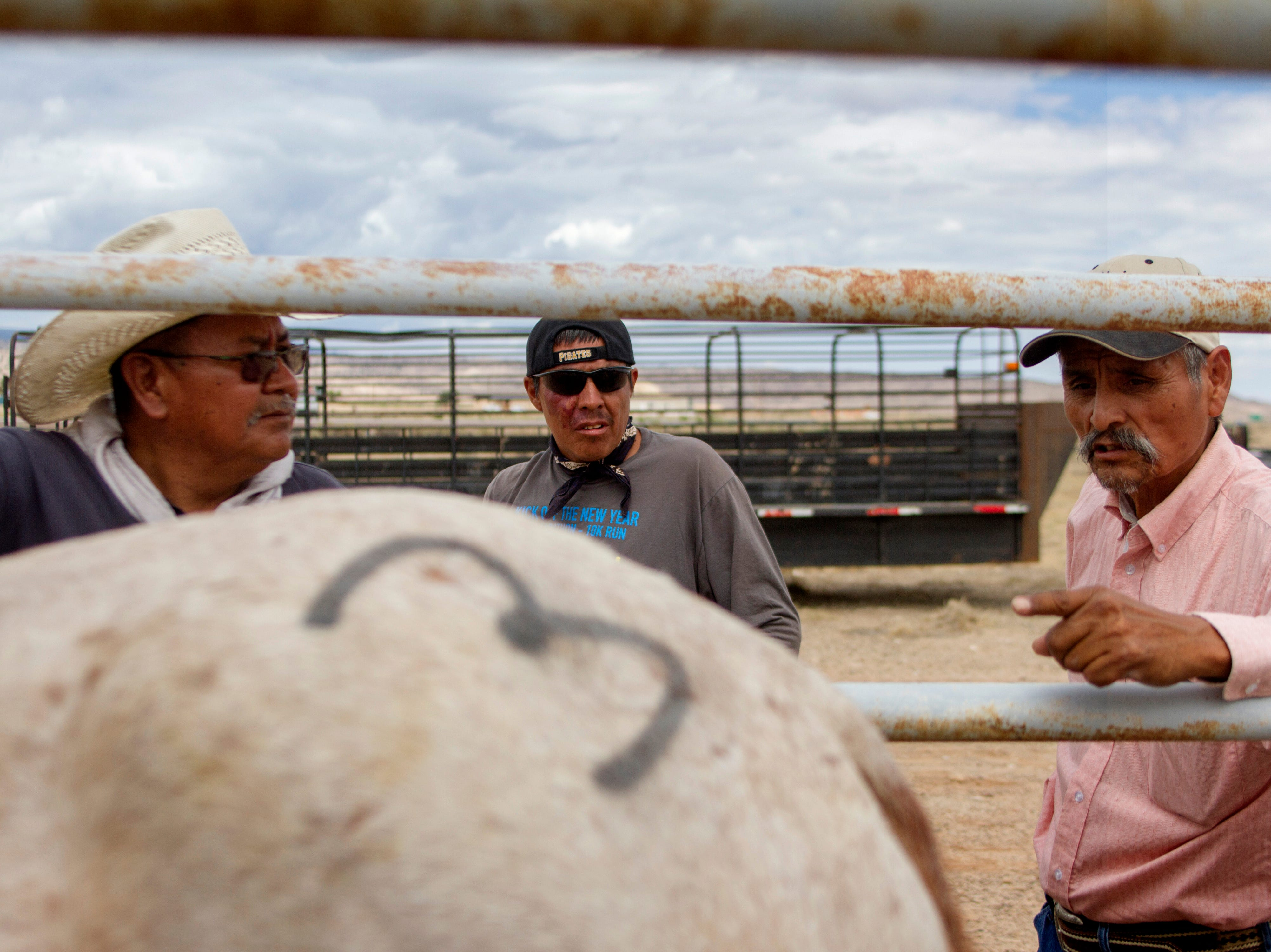 Arnoldo Curtis, an employee with the Navajo Nation Department of Agriculture, center, and Larry Tsosie, right, a district grazing chair person with the Navajo Nation Department of Agriculture look over a surrendered horse, as it's processed, Friday, August 3, 2018 as horses are processed at the auction yard in Naschitti.