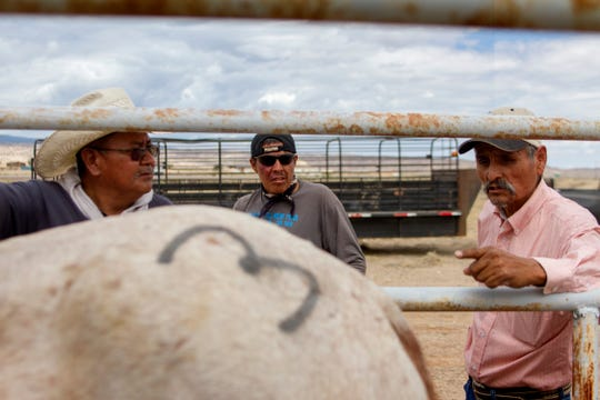 Arnoldo Curtis, an employee with the Navajo Nation Department of Agriculture, center, and Larry Tsosie, right, a district grazing chairman with the Navajo Nation Department of Agriculture, look over a surrendered horse as it is processed Friday at the auction yard in Naschitti.