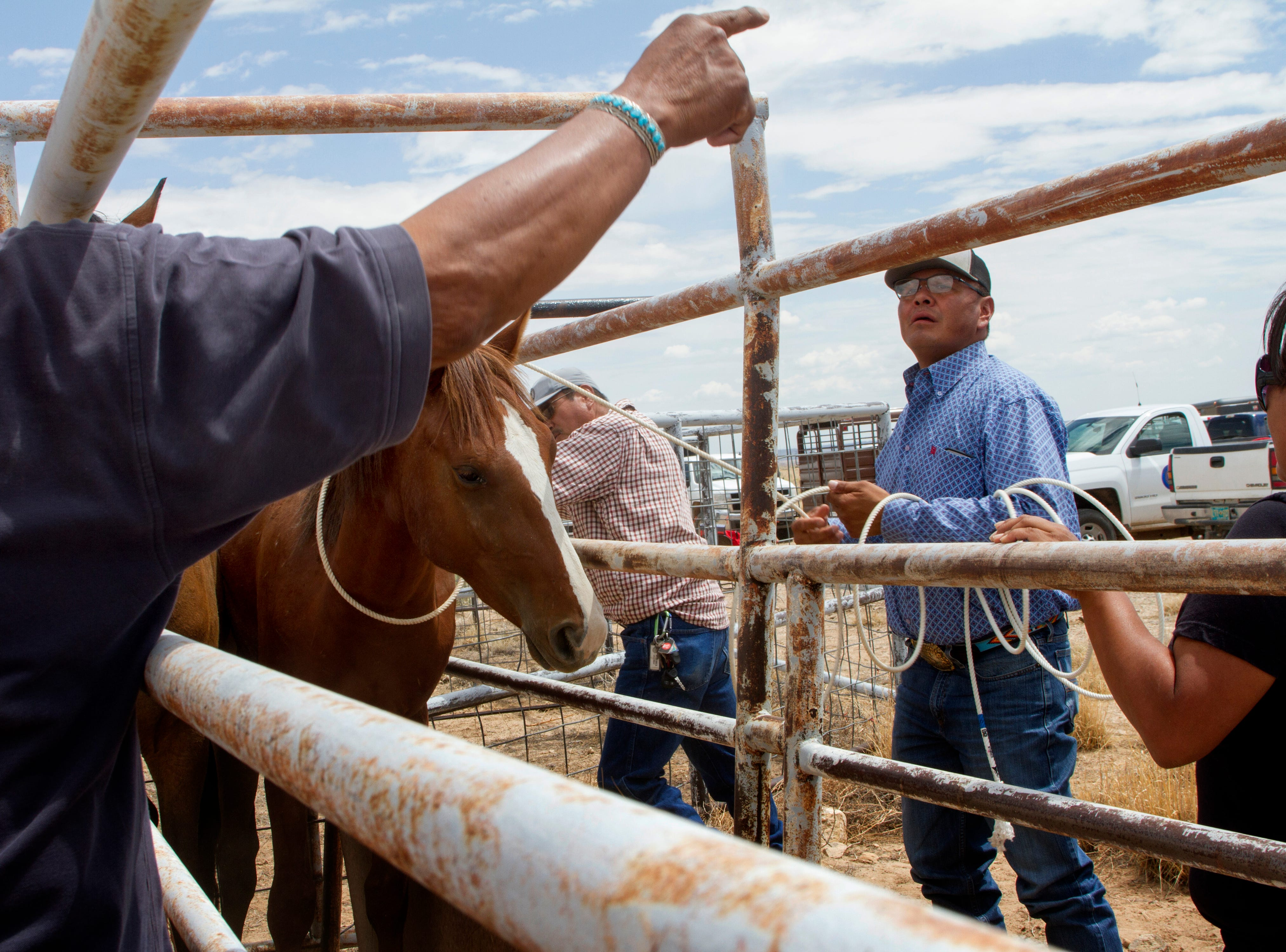 Wayne Franklin, a certified Journeyman farrier with the Navajo Nation Department of Agriculture helps leads horses down a chute, Friday, August 3, 2018 at the auction yard in Naschitti.