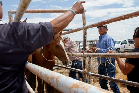 Wayne Franklin, a certified journeyman farrier with the Navajo Nation Department of Agriculture, helps leads horses down a chute Friday at the auction yard in Naschitti.