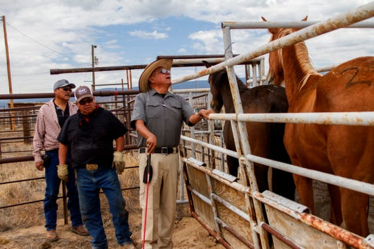 Sgt. Randall Jim, right, of the Navajo Nation Rangers inspects and identifies surrendered horses Friday at the auction yard in Naschitti.