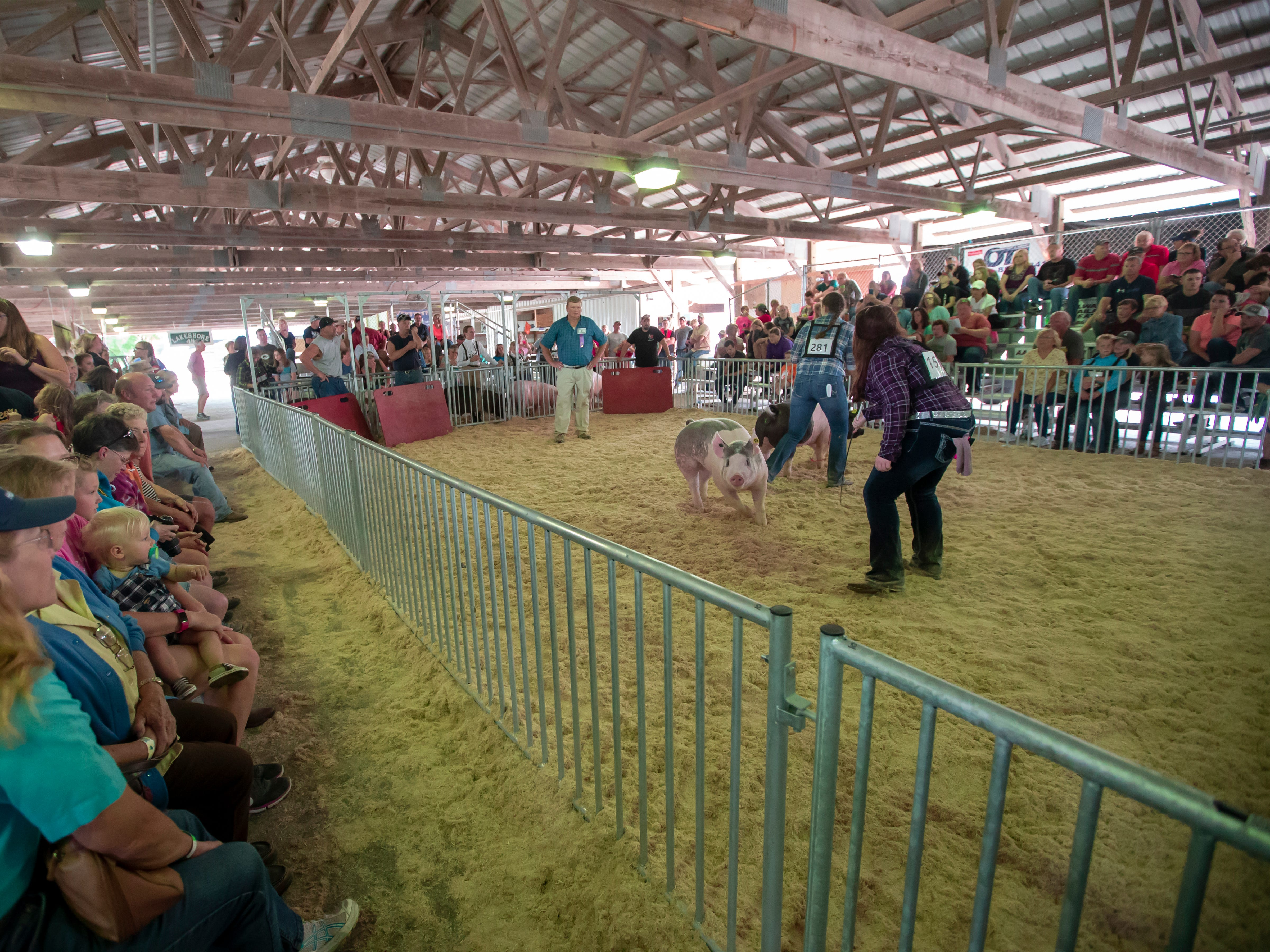 4-H kids take turns showing their pigs during the Winnebago County Fair 4-H swine show on Friday, Aug. 3, 2018.