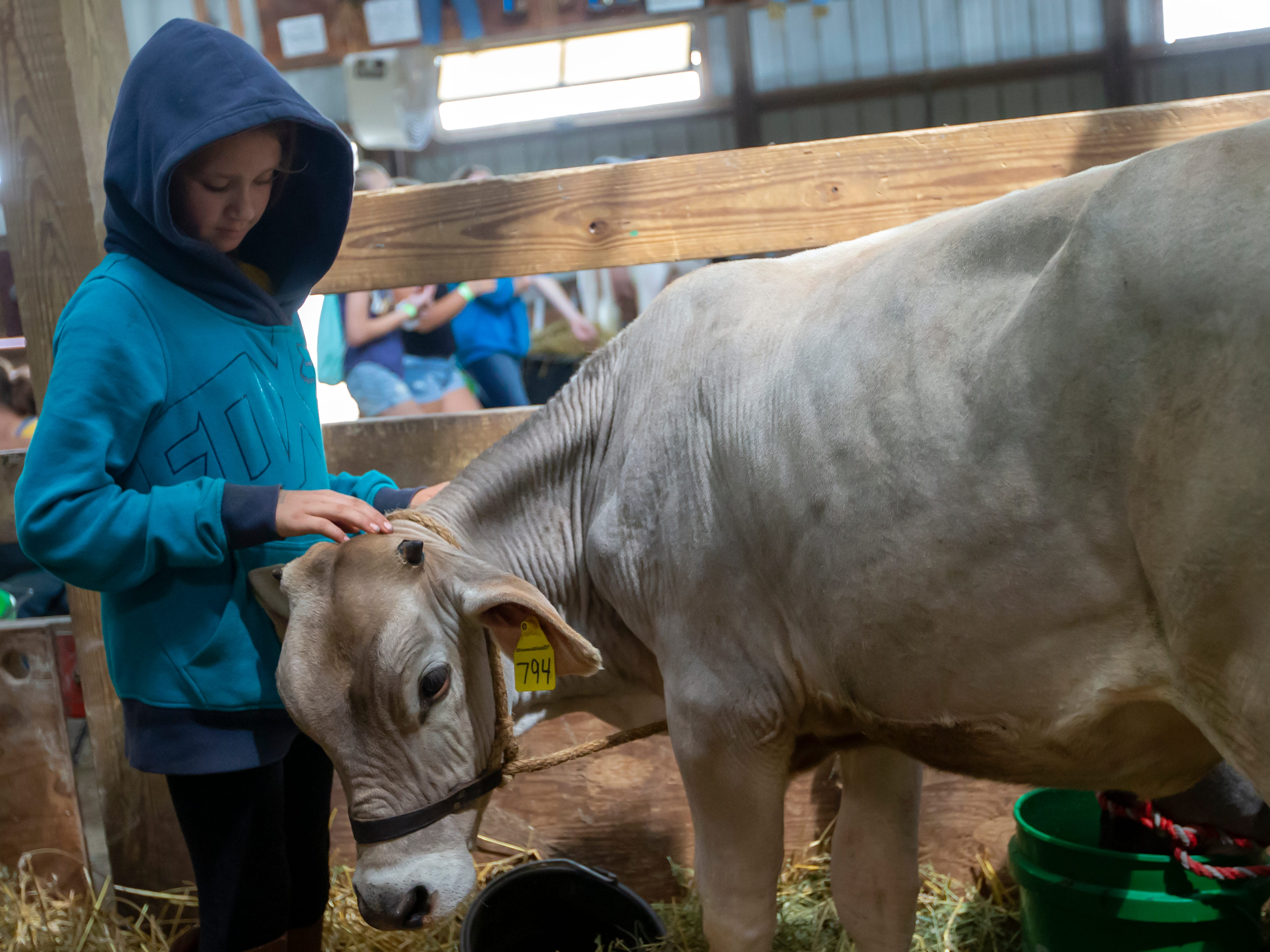 Madeline McBrair gives her cow named Moonlight some love during the Winnebago County Fair on Friday, Aug. 3, 2018.