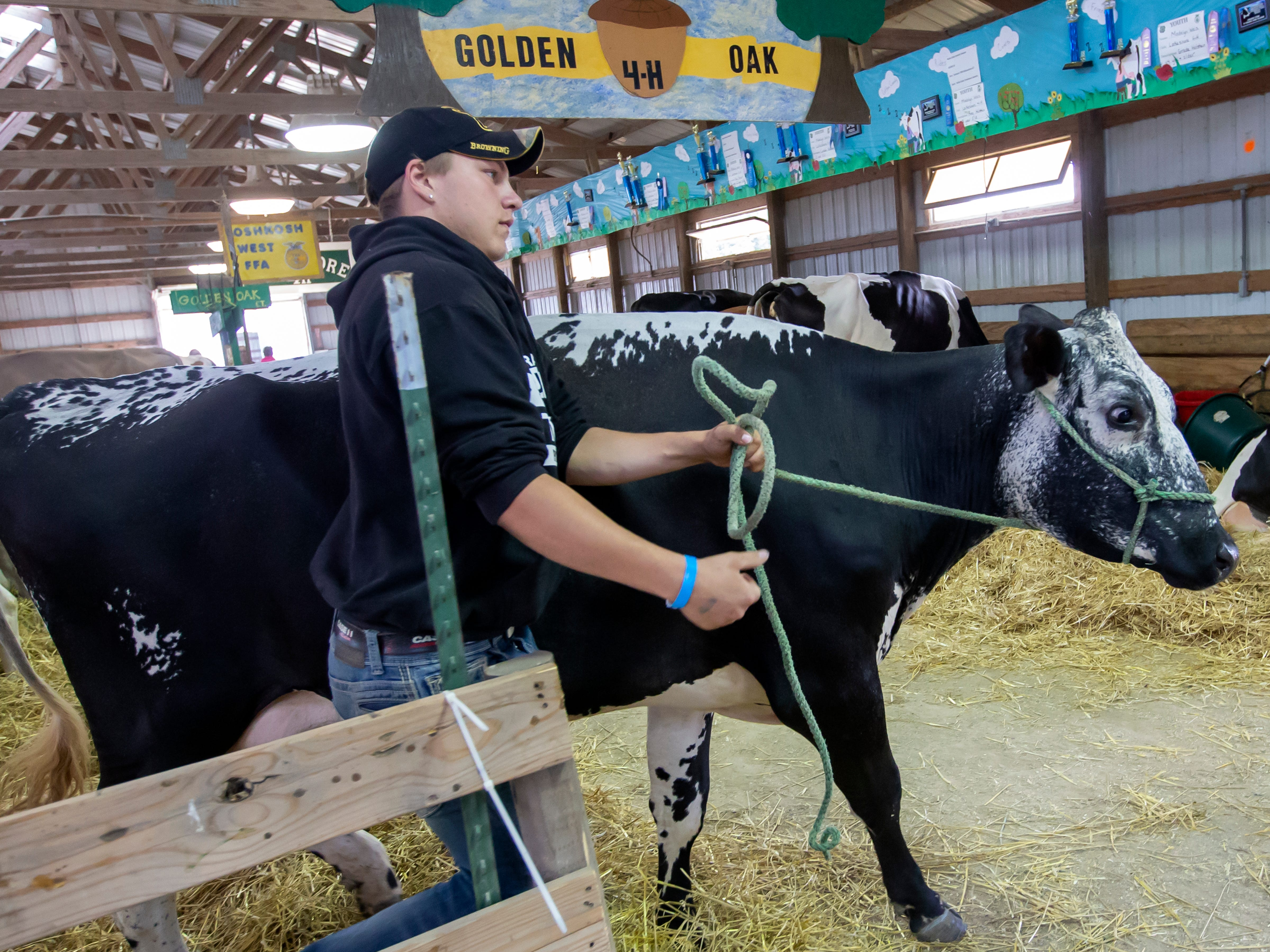 Ethan Braasch walks his Lineback milking cow named Liberty to drink water during the Winnebago County Fair on Friday, Aug. 3, 2018.