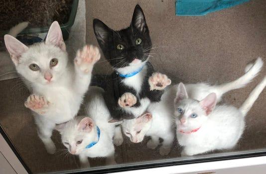 Kittens2018 Cvas