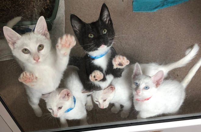 Here we have Hotah, Elu, Istas, Ayashe and Nita, all girls except one boy, who are almost 3 months old. These sweet babies just want to love and hug and have fun. Could one of them be for you?