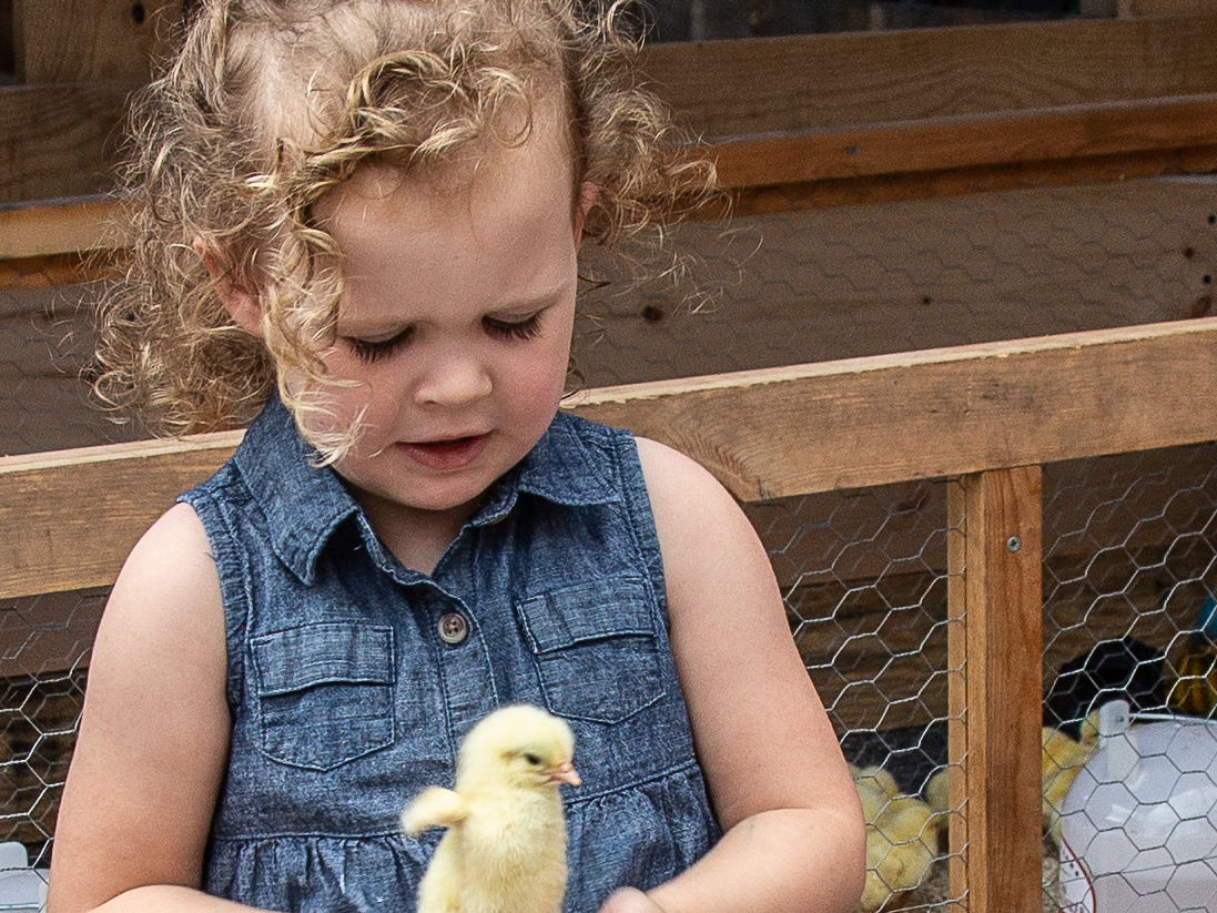 Audrey Adkins, 3, of Snow Hill checks out the baby chick during the Snow Hill's 20th Blessing of the Combines honoring local farmers.  It was attended this year by approximately 4,000 people,