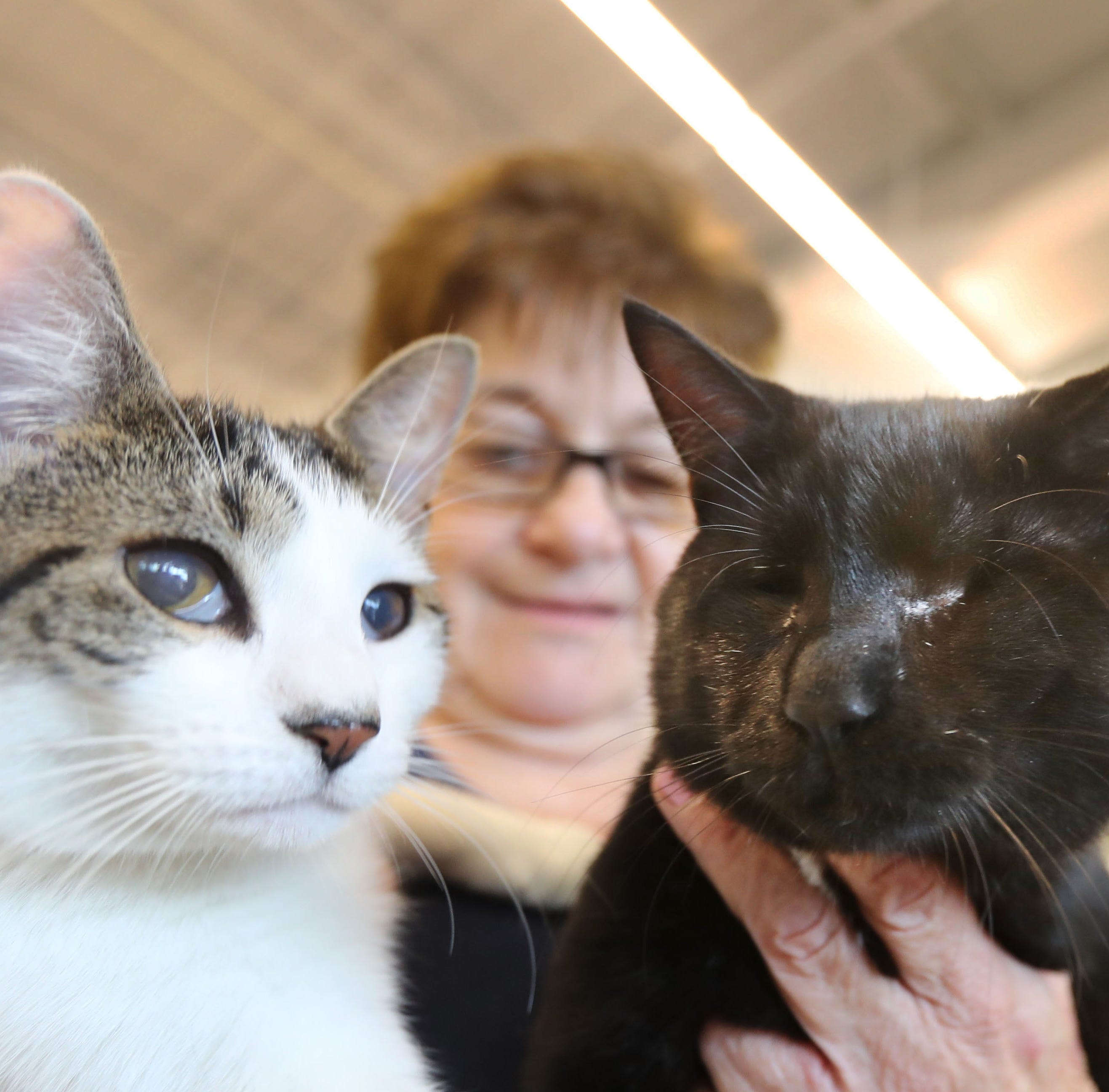 Blind cat and his 'seeing-eye' sister fail to get adopted