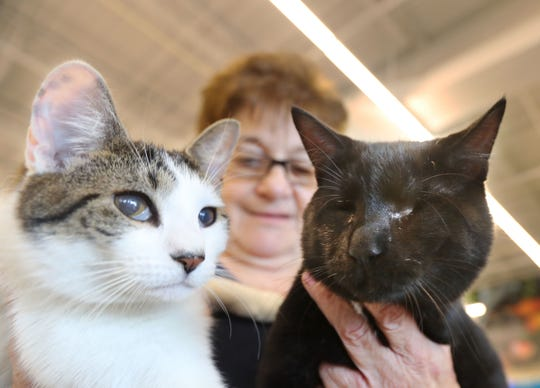 """Marilyn Rogan, a volunteer at the HI-Tor Animal Care Center in Pomona, holds 10-month old litter mates Cashew, left, and Brazil, during a pet-adoption program Saturday at PetSmart in Nanuet. Brazil had his eyes surgically removed due to a malformation present from birth. Rogan says that Cashew, his constant companion, now serves as a kind of """"seeing-eye cat"""" for Brazil. The animal shelter is trying to have both cats adopted together."""