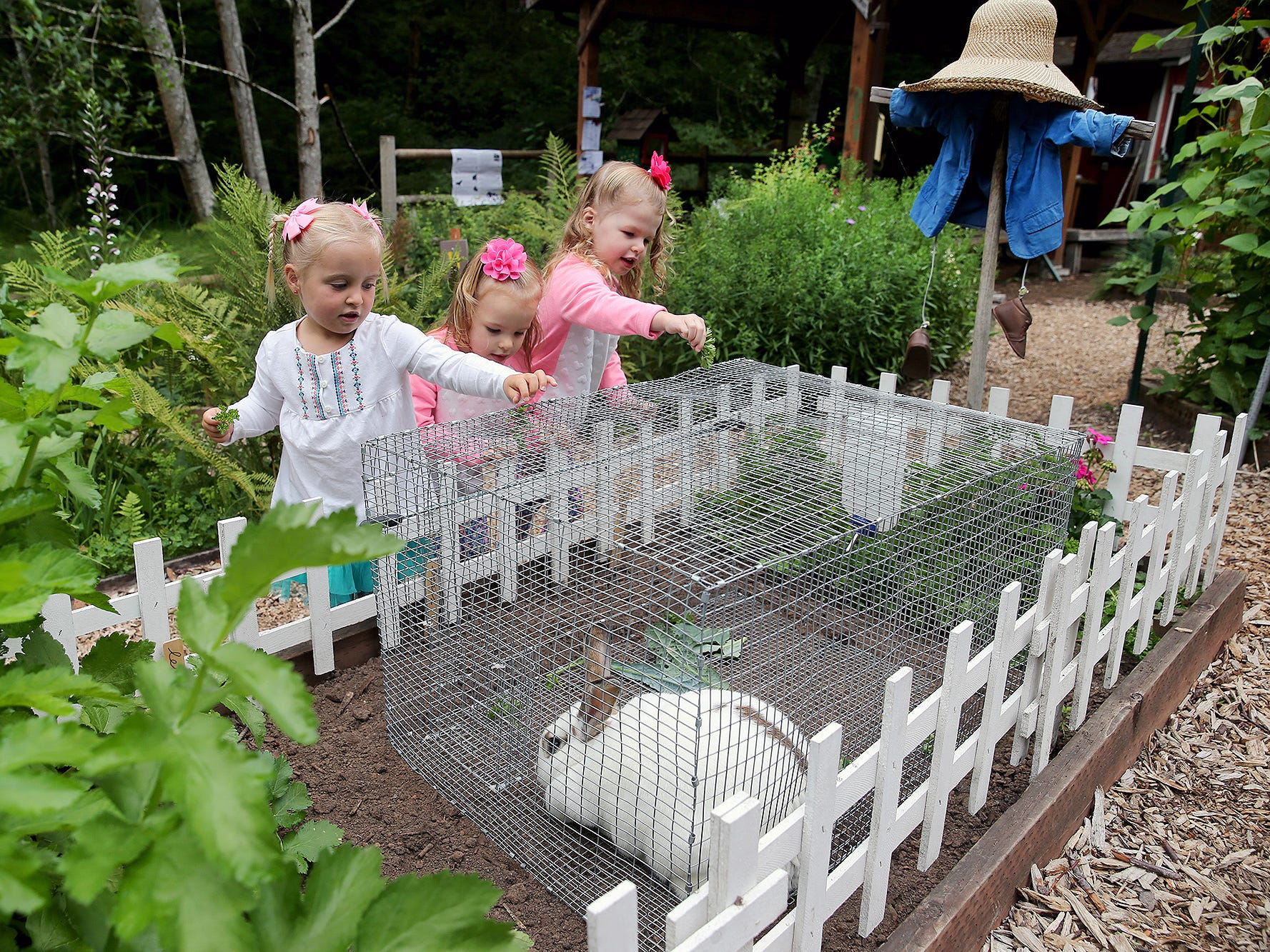 McKenna Slattery, 3, (left) feeds the rabbit at the 30th Anniversary celebration open house for the Anna Smith Garden on Saturday August 4, 2018.  Helping are twins Jordy Clough and sister Tessa, 3,.